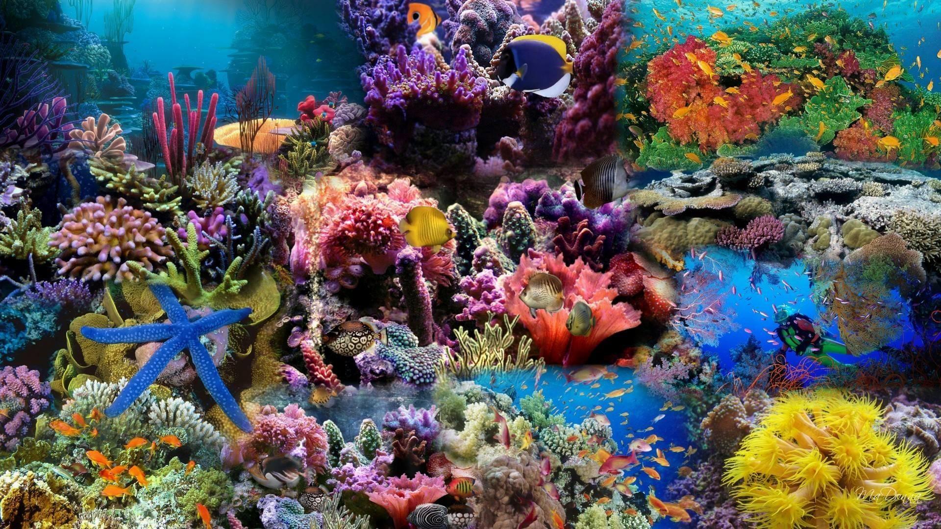 ocean hd live wallpaper source a· koi fish live wallpaper 56 images