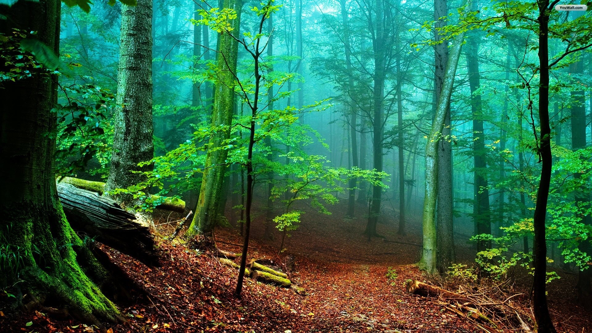 1920x1080 YouWall - Forest Fog Wallpaper - wallpaper,wallpapers,free wallpaper .