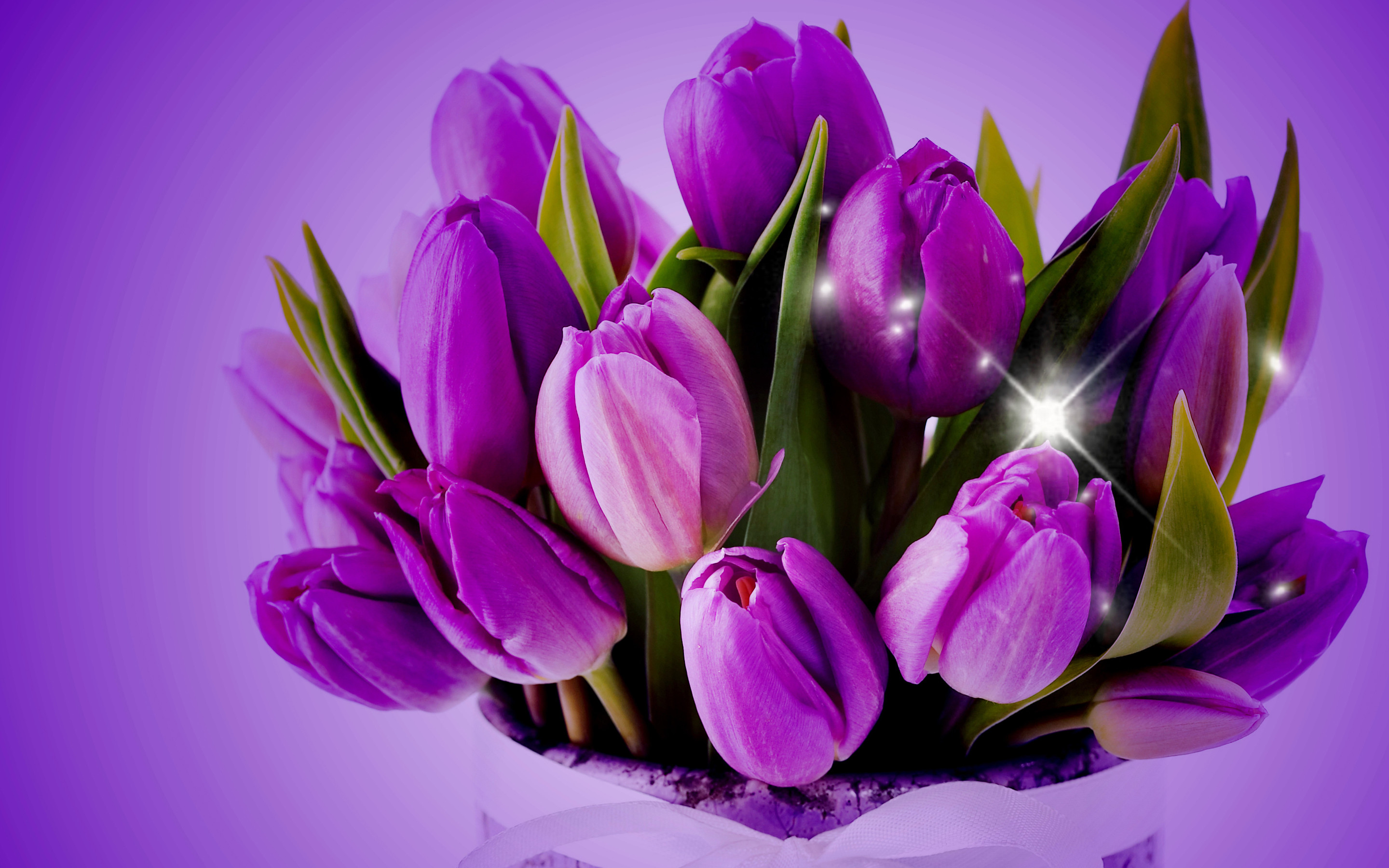 2880x1800 Download Purple Tulips HD Desktop Wallpapers. We select the best .