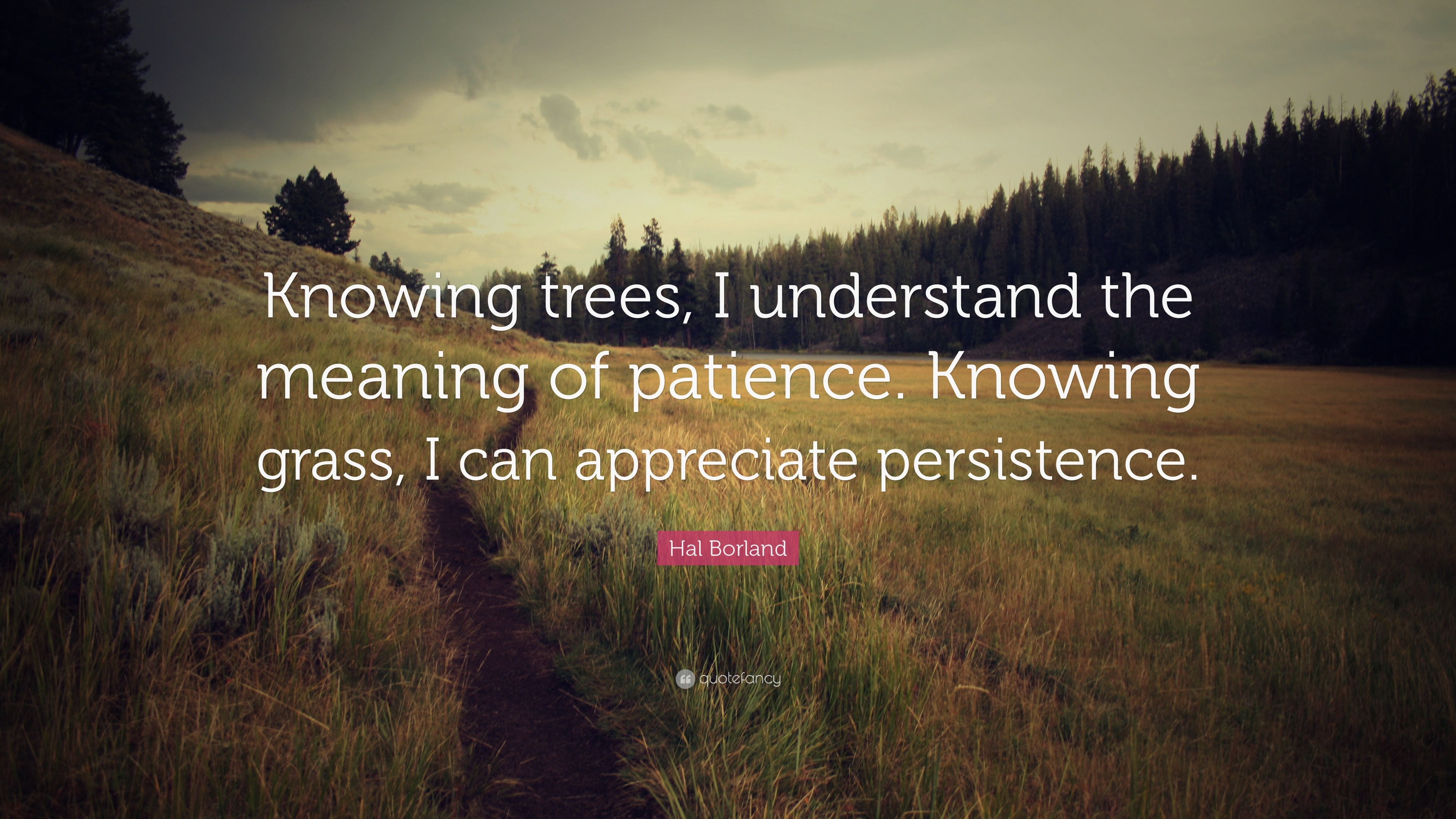 "3840x2160 Nature Quotes: ""Knowing trees, I understand the meaning of patience.  Knowing grass"