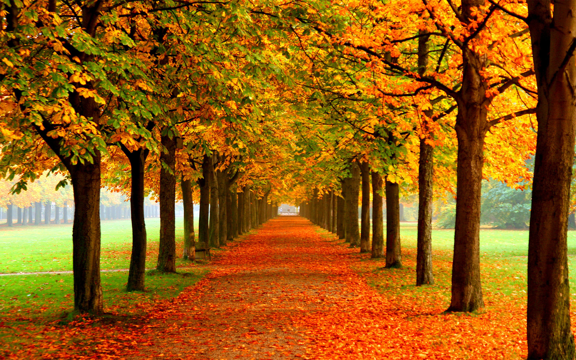 High Resolution Fall Wallpaper: Autumn Background (61+ Images