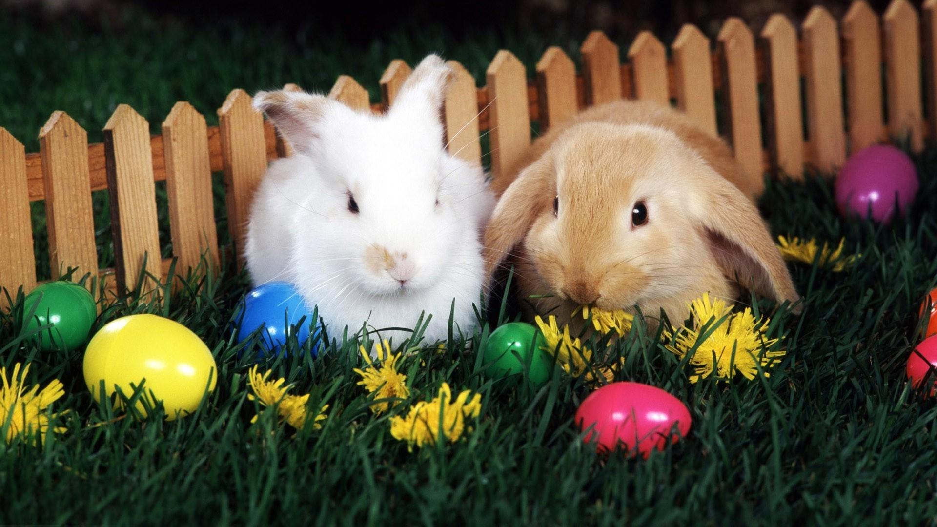 Easter wallpapers for desktop 64 images - Easter desktop wallpaper ...