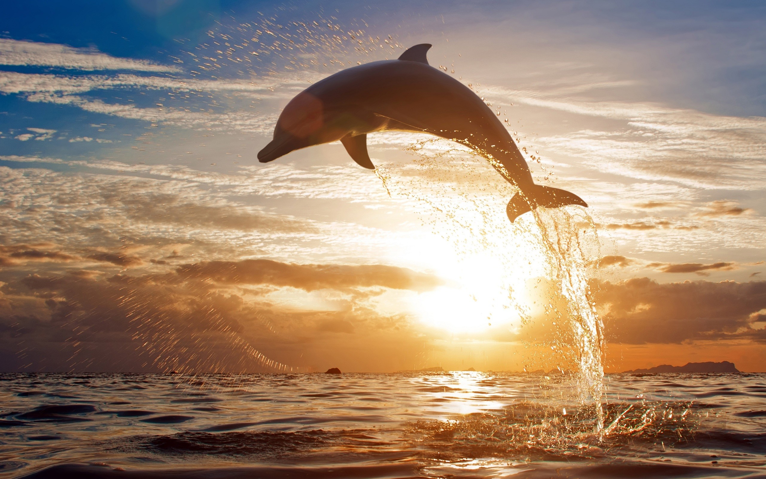 2560x1600 Bottlenose Dolphin Wallpaper Dolphins Animals