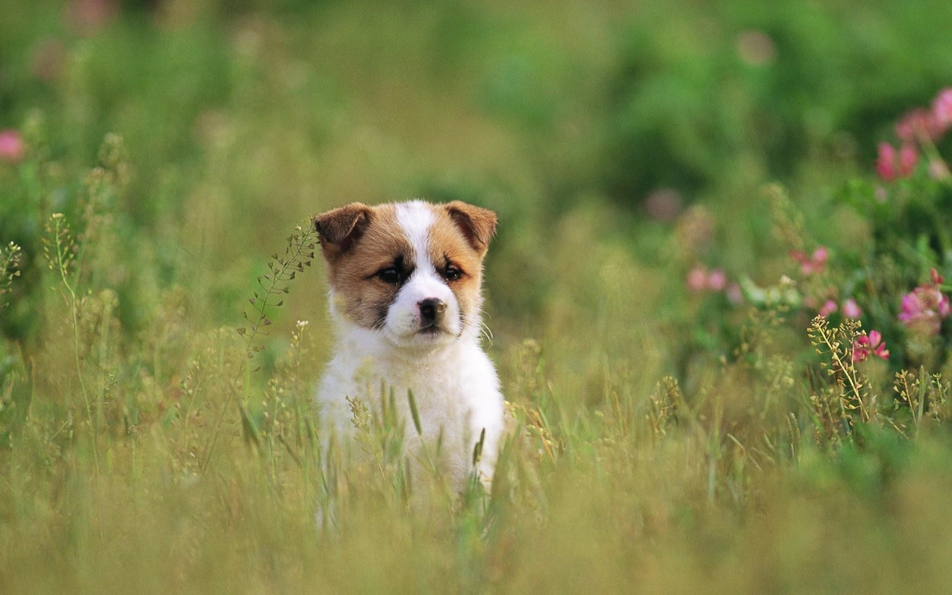 Baby Dogs Wallpapers 54 Images