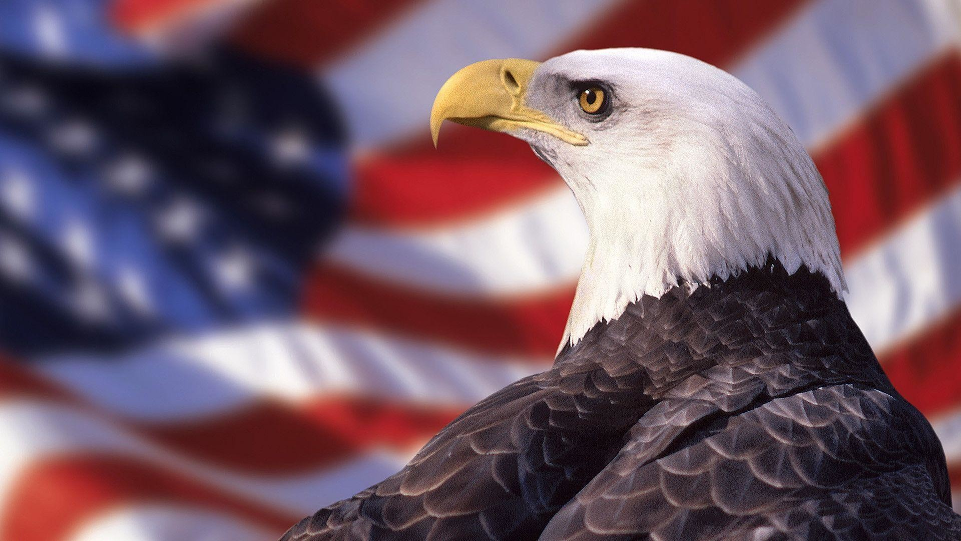 1920x1080 Bald Eagle American Flag Wallpaper | Best Free Wallpaper