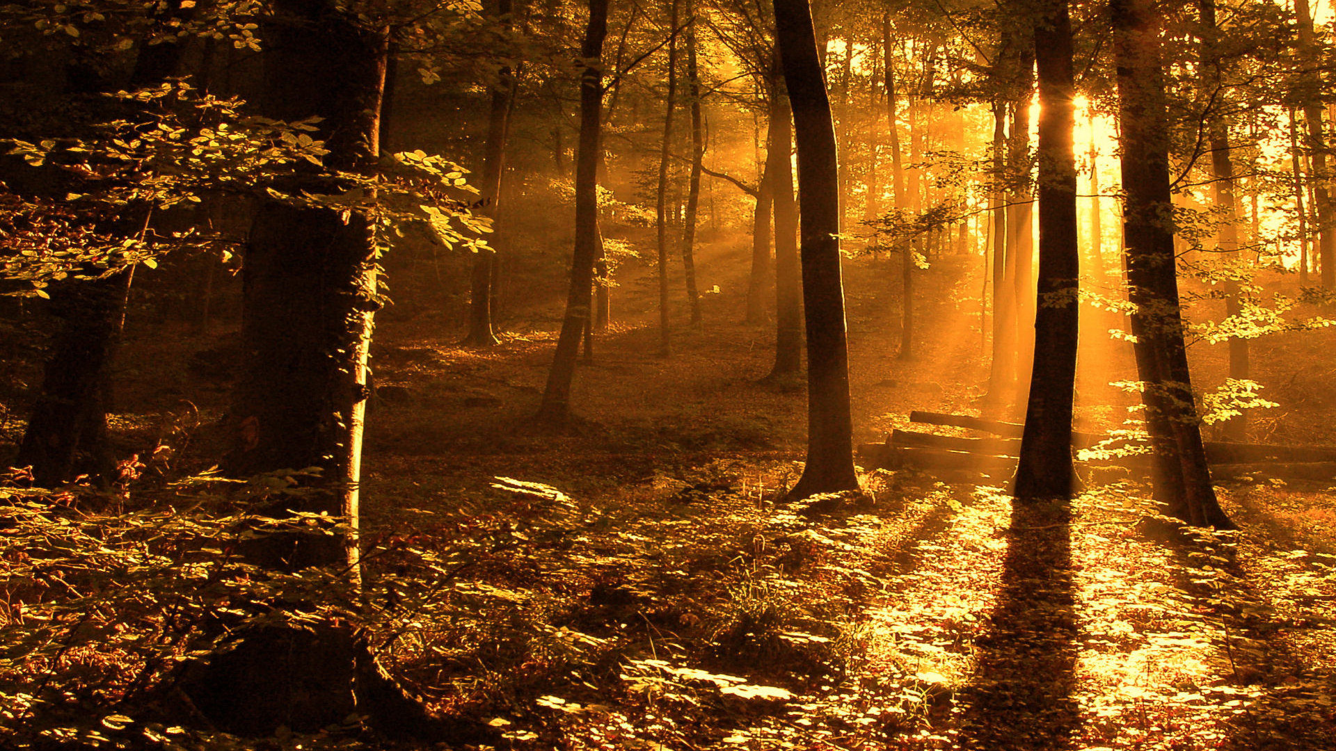 1920x1080 nature, Sun, trees, forest, woods, sunlight :: Wallpapers