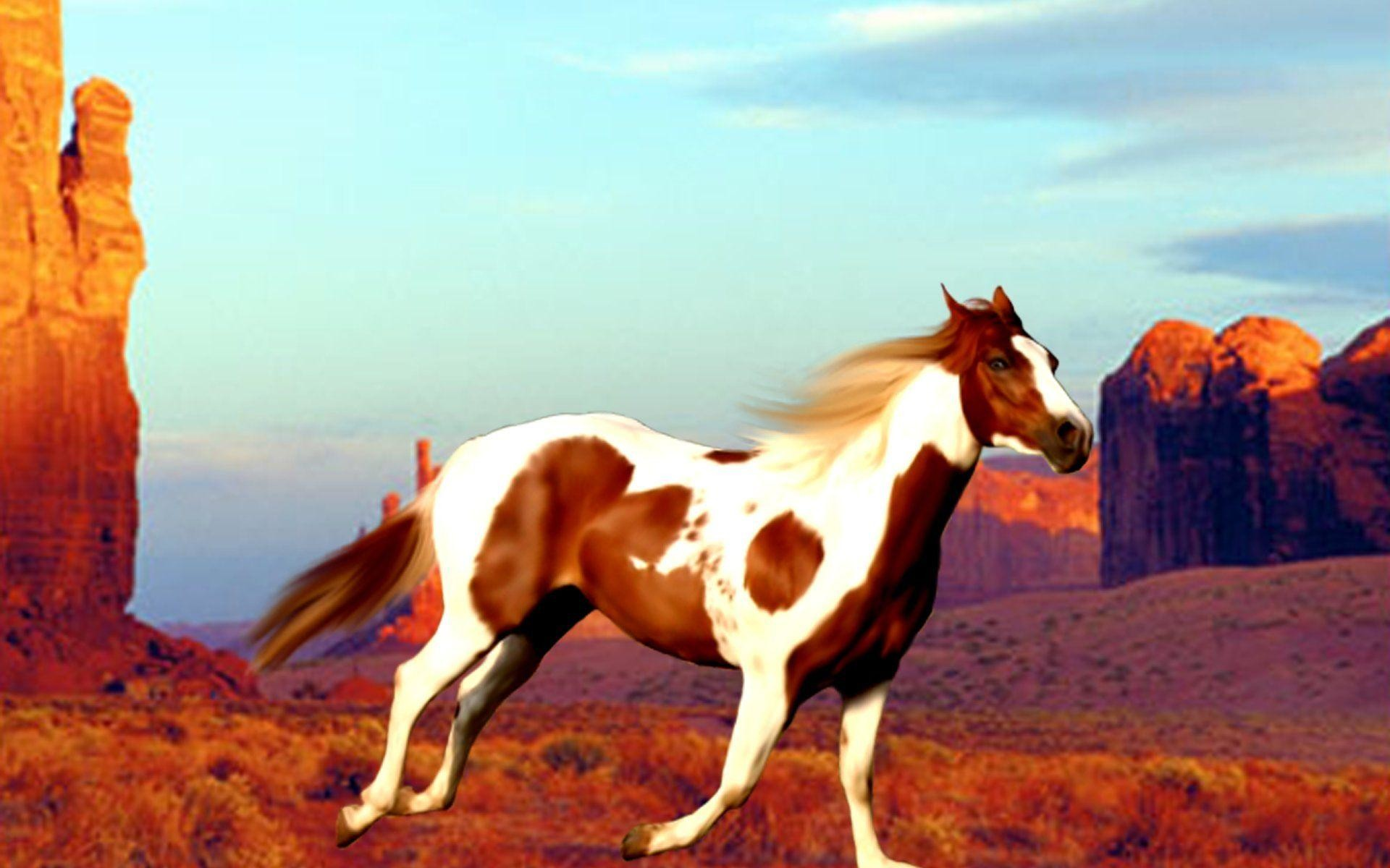 Paint Horse Wallpaper 40 Images