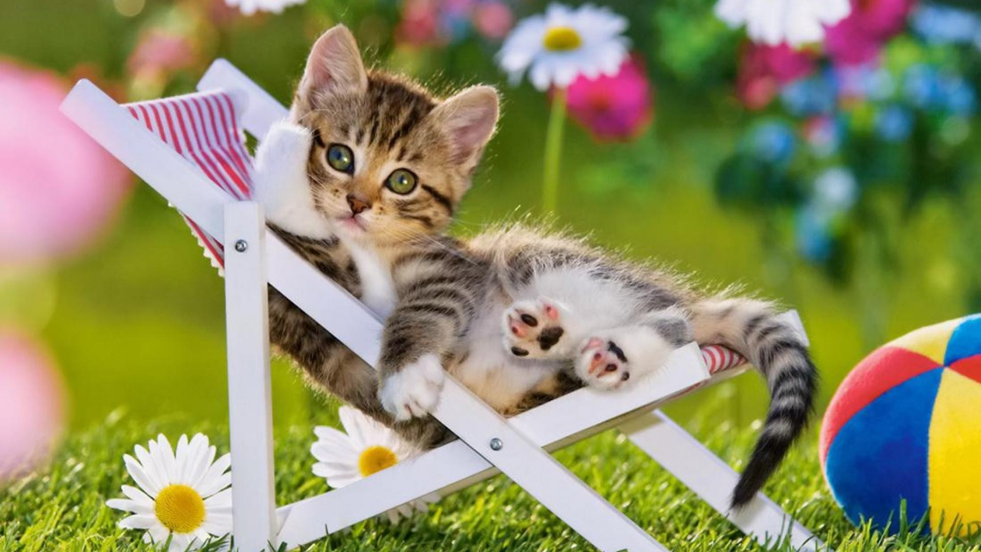 1920x1080 Summer Cat Wallpaper Images. Dooves Wallpaper - fond d'ecran