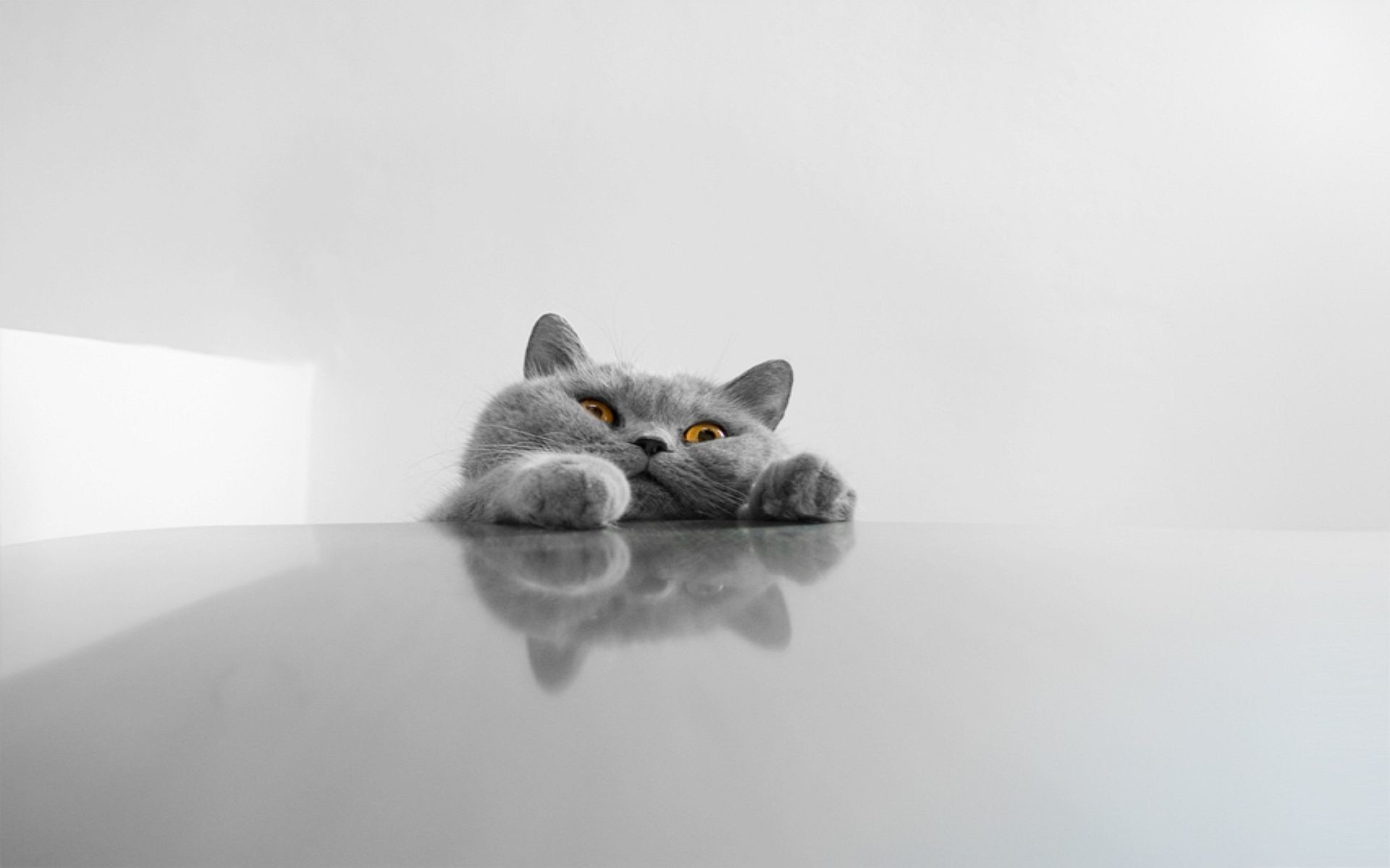 1920x1200 Cat Face Funny Wallpaper Wallpaper