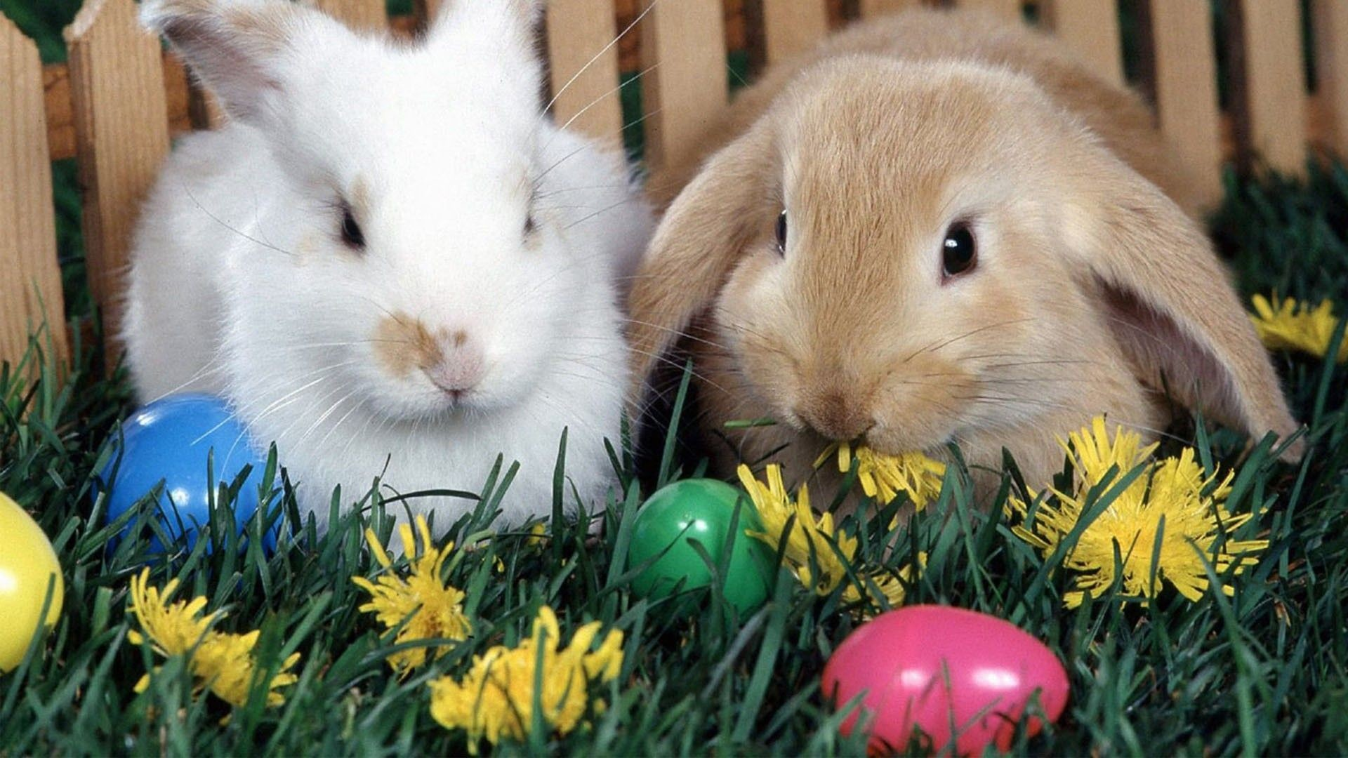 Easter Bunny Wallpapers (64+ images)