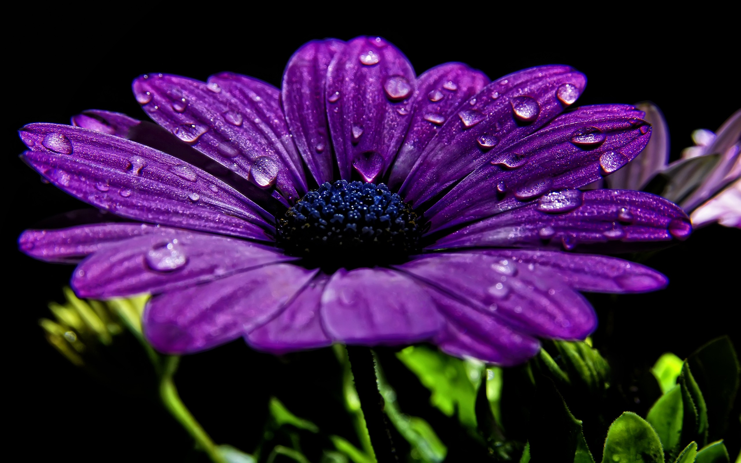 2560x1600 Purple Flower Wallpaper Mobile ...