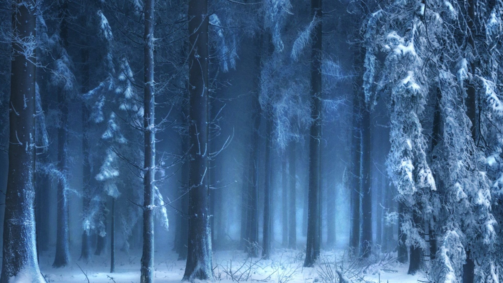 1920x1080 Landscapes Forest Woods Snow Trees Winter Nature Wallpapers For Desktop Hd  Free Download