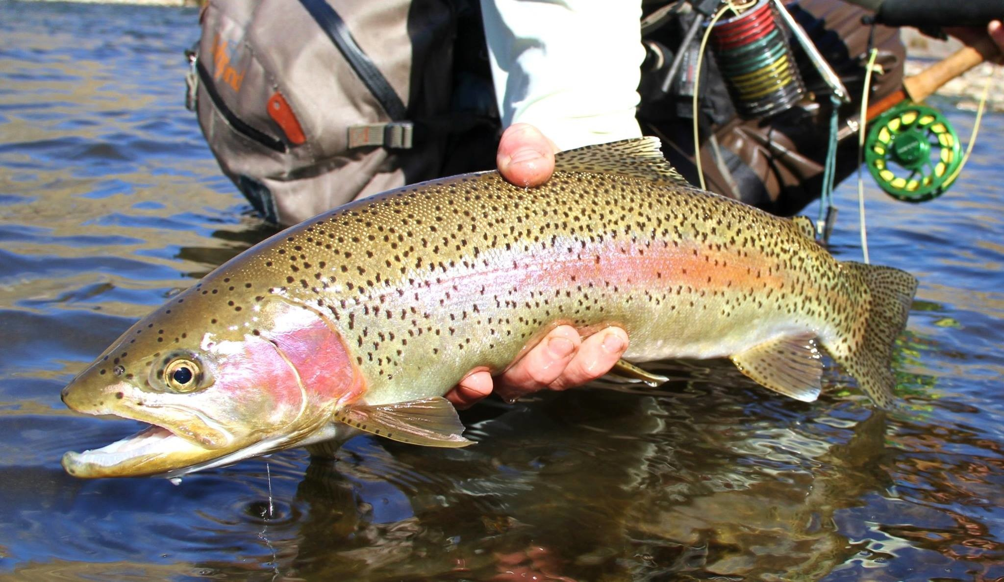 Orvis Fly Fishing Wallpaper 57 Images