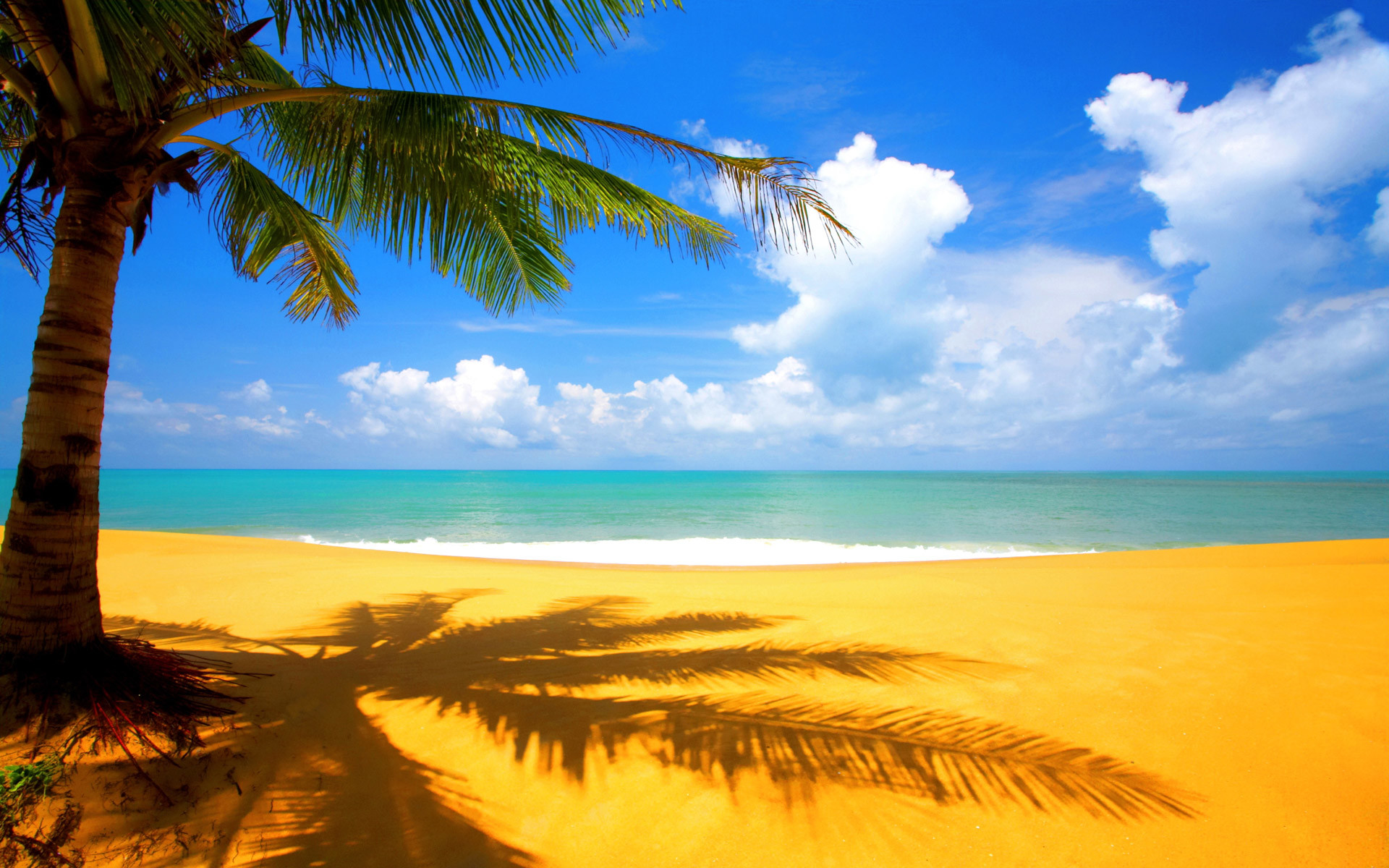 1920x1200 Wallpaper Of Beach Scenery: A Beautiful Shadow Of Palm Near Beach .