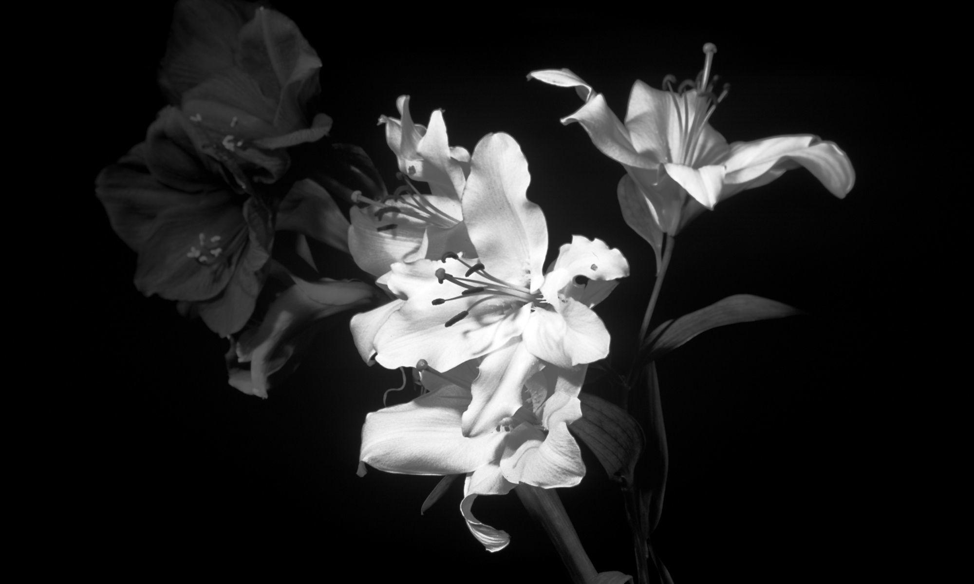 Dark Flower Wallpaper 70 Images