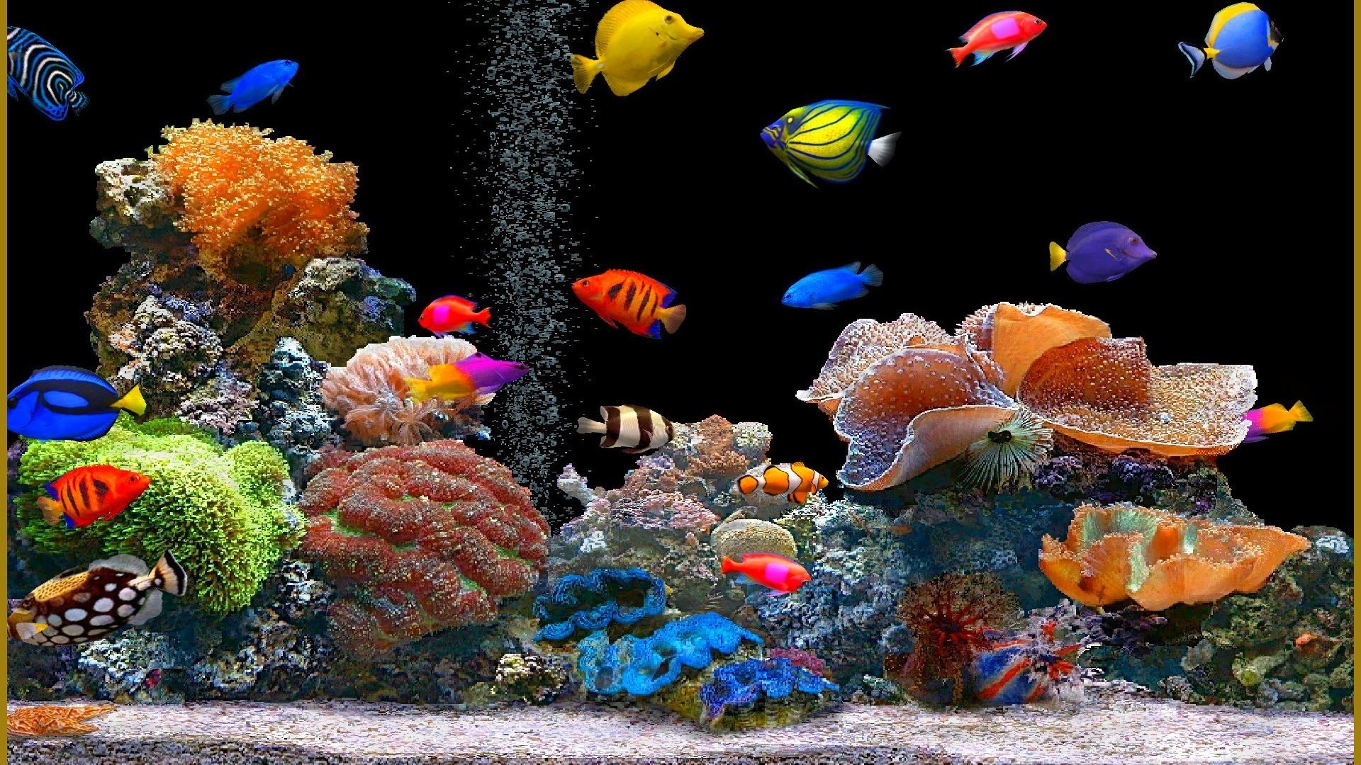 1920x1080 Animated Desktop Wallpaper Fish for Windows 8.1 | All for Windows 10 .