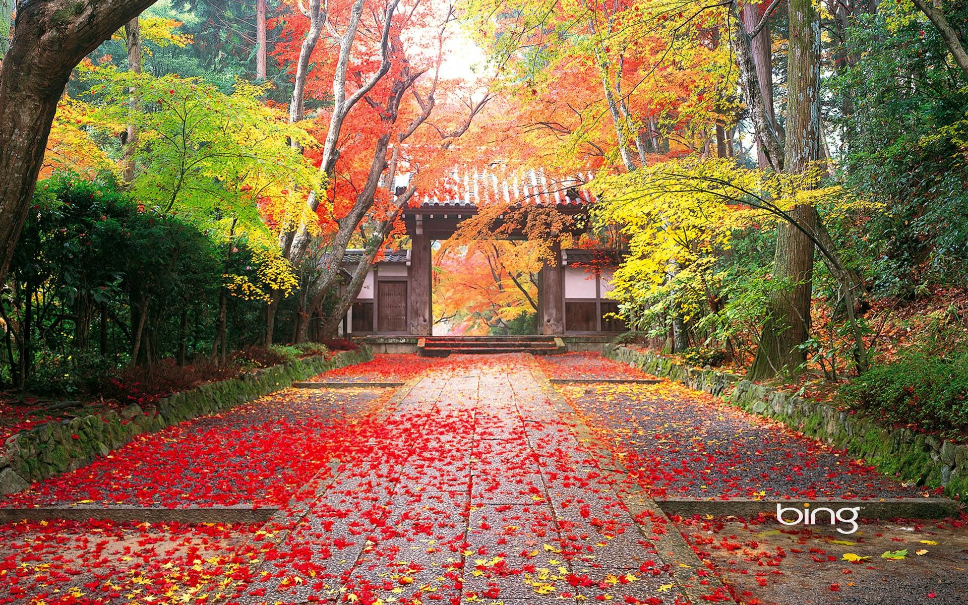 Japanese Nature Wallpaper 46 Images