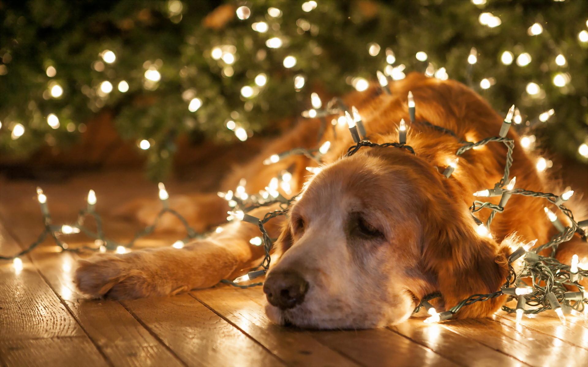 Funny Christmas Wallpaper.Christmas Animal Wallpaper 67 Images