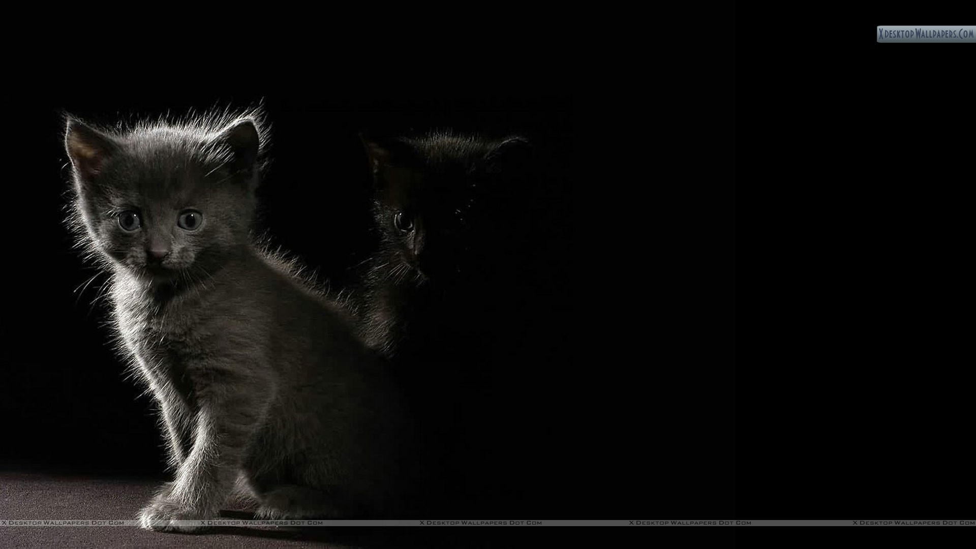"1920x1080 You are viewing wallpaper titled ""Cat In Dark Shadow"" ..."