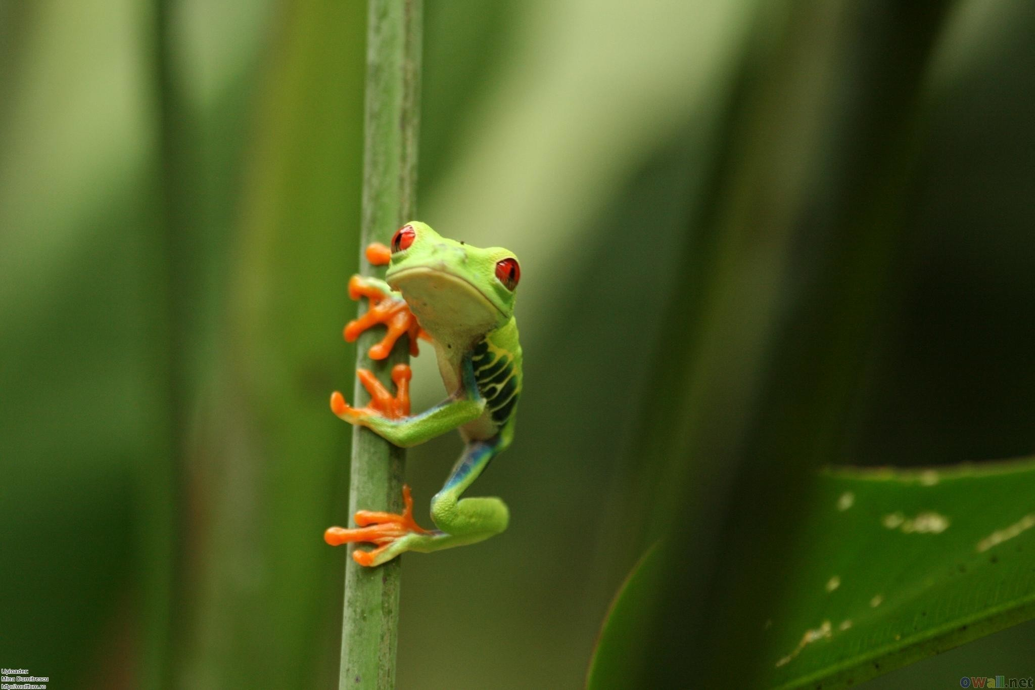 2048x1365 HD Finding That Frog Wallpaper
