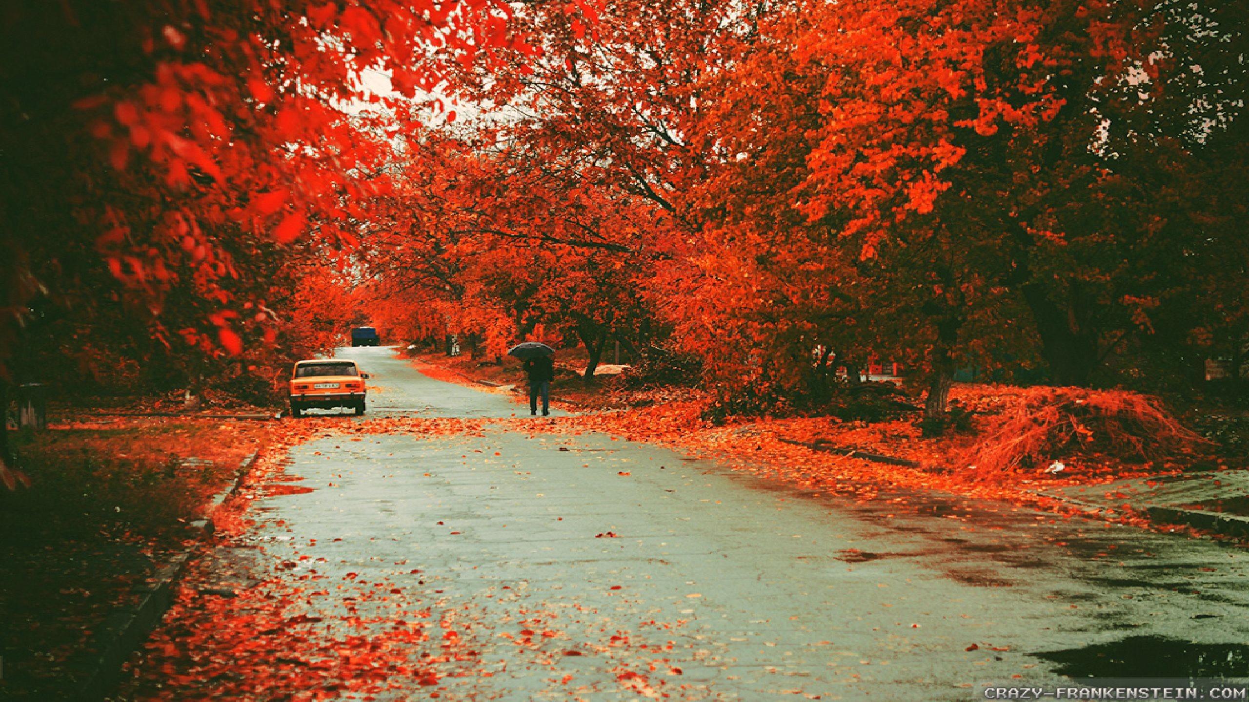 2560x1600 Beautiful Fall Widescreen Wallpaper