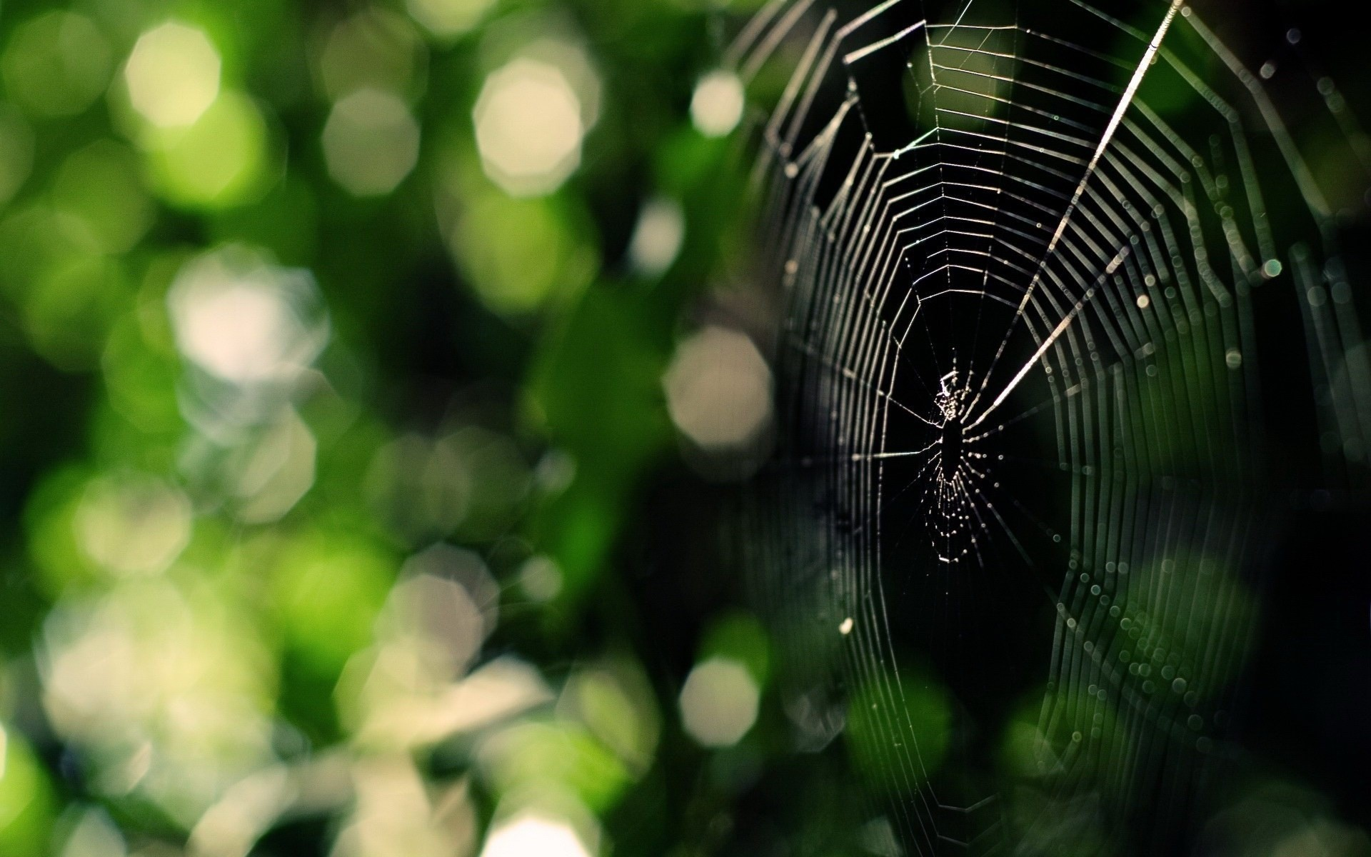 1920x1200 wallpapers free spider web,  (375 kB)