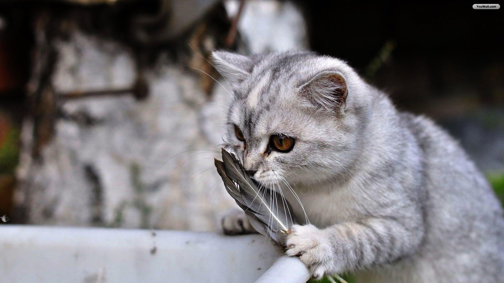 Reading cats computer wallpaper 47 images - Cute kitten wallpaper free download ...