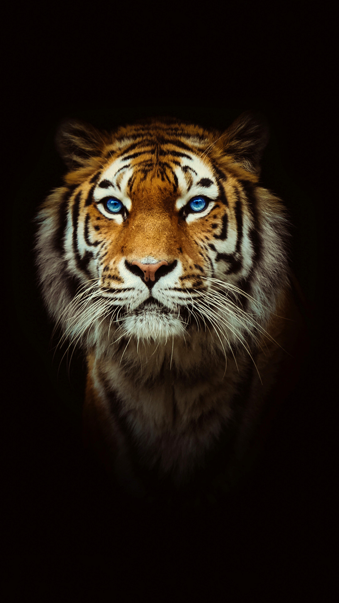 Black Tiger Hd Iphone Wallpaper Labzada