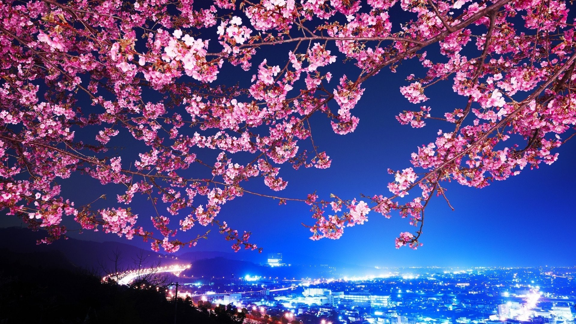 1920x1080 Blossomed Cherry Tree HD Wide Wallpaper for Widescreen (53 Wallpapers) – HD  Wallpapers