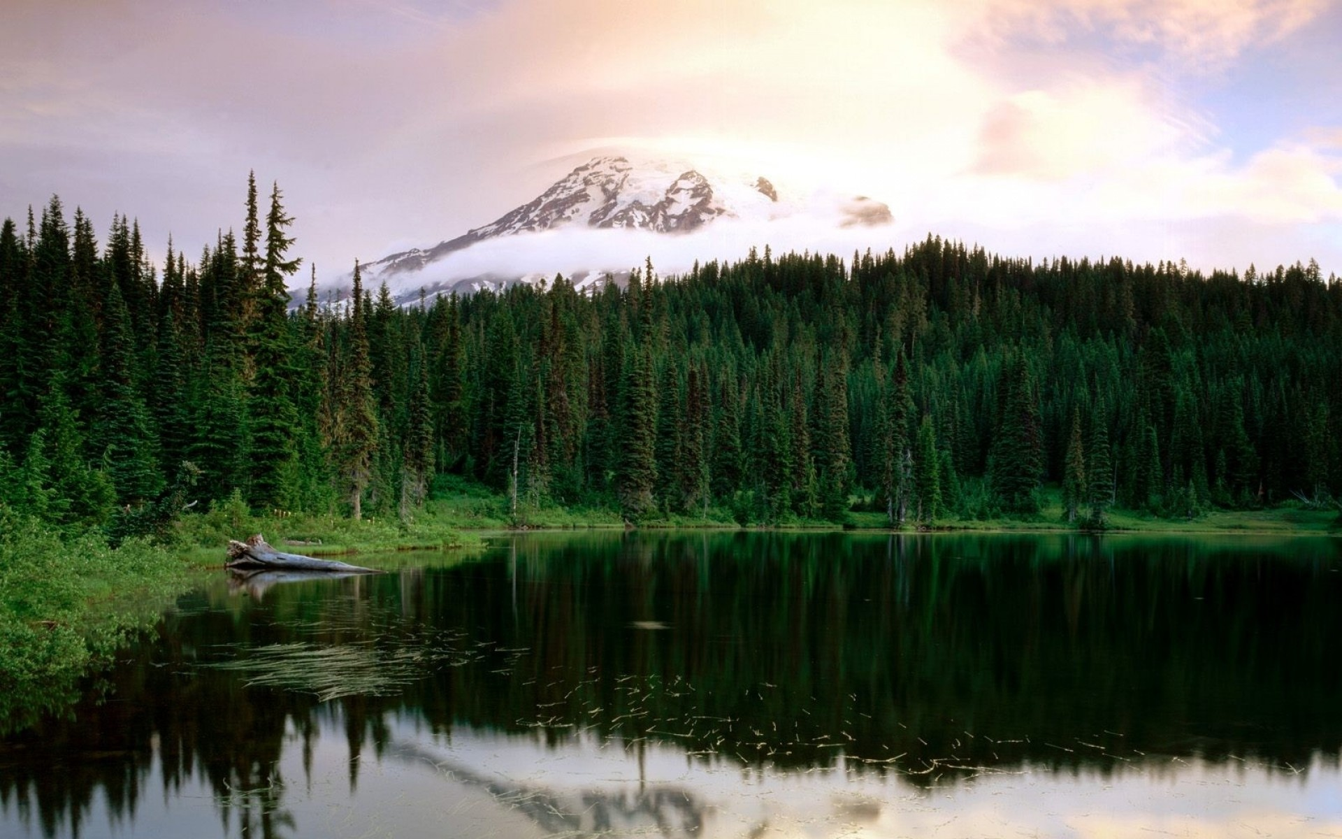 1920x1200 Bild: Mount Rainier National Park wallpapers and stock photos. Â«