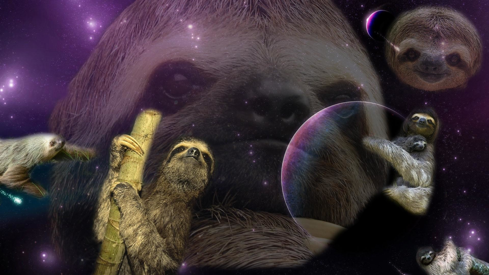 1920x1080 in class and created a sloth wallpaper. I'm currently adding one sloth .