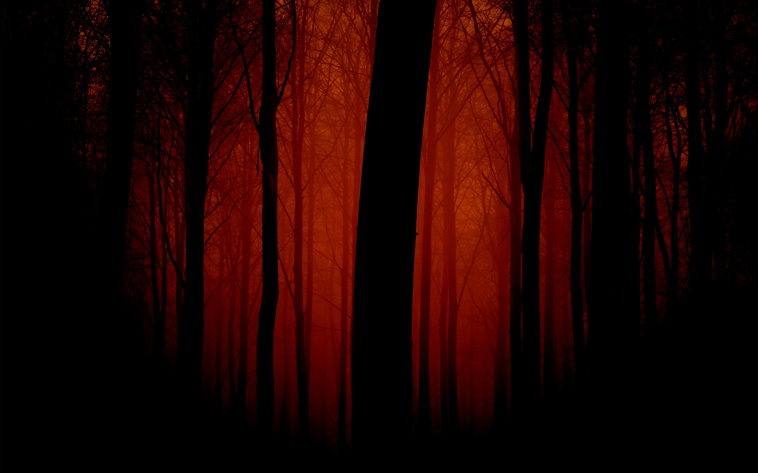 Autumn Forest Wallpaper Autumn Nature Wallpapers in jpg format for