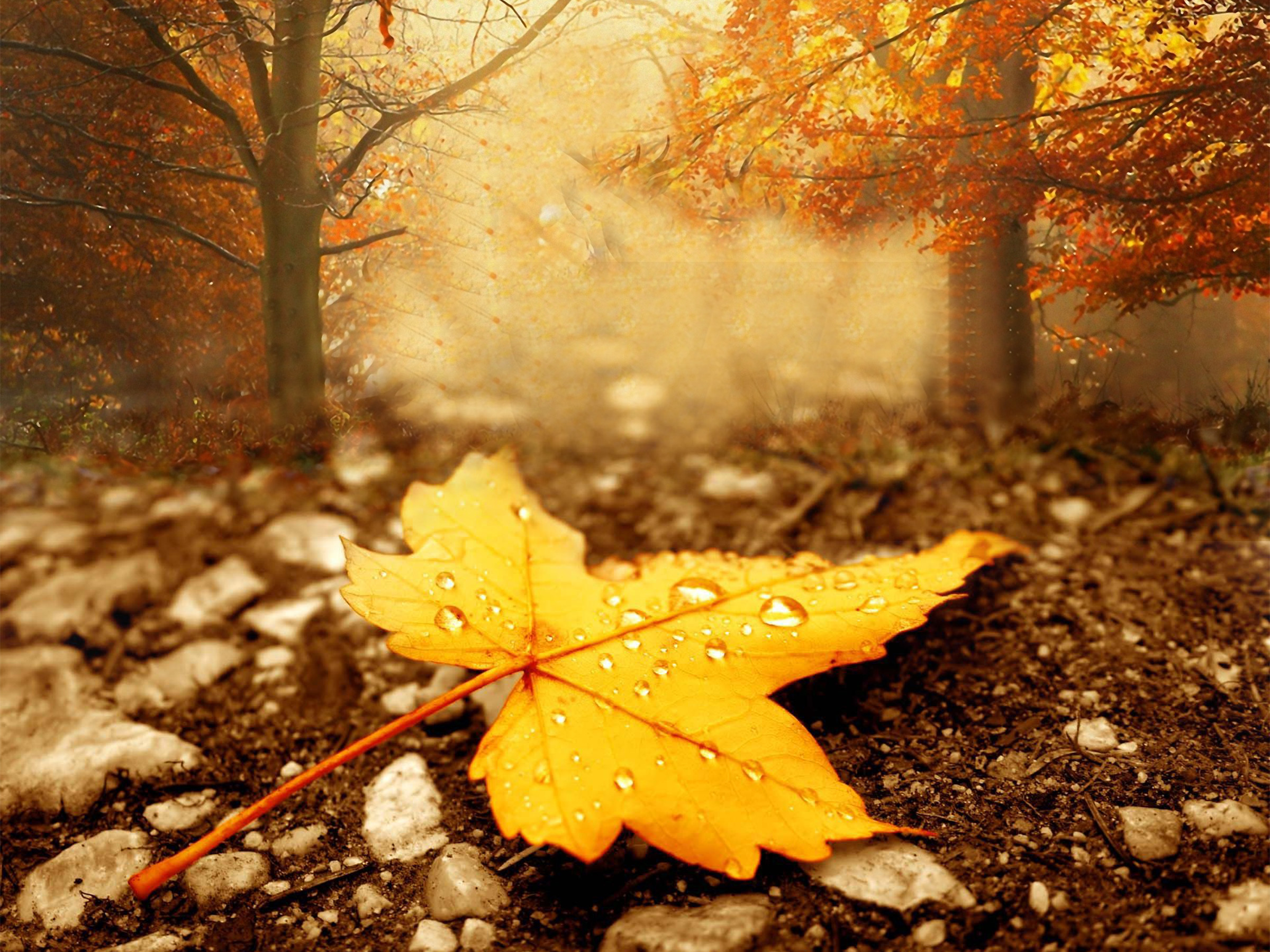 1920x1200 Free Desktop Wallpaper Fall Season