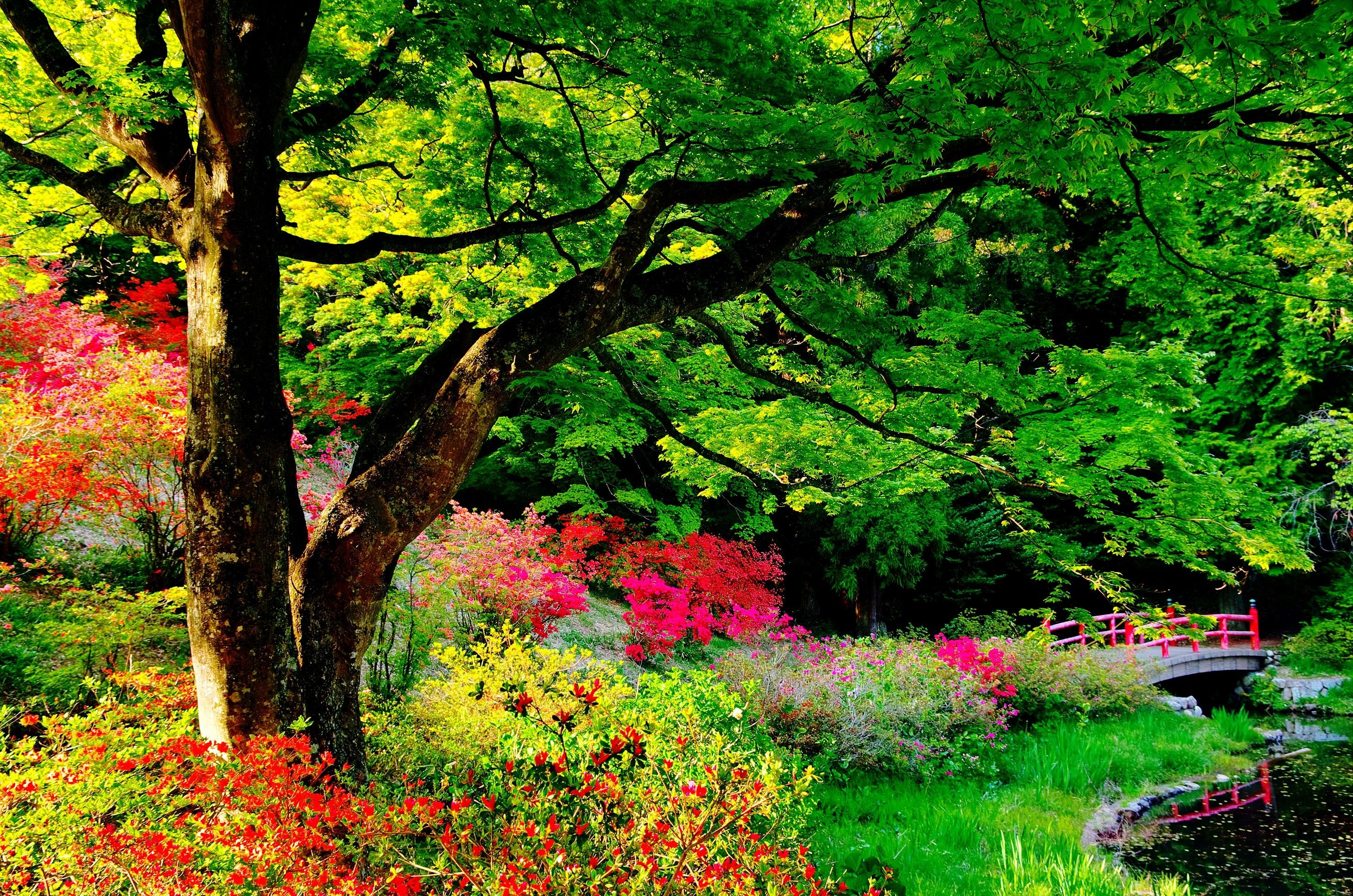 Japan Garden Flowers: Japanese Garden Wallpapers (65+ Images