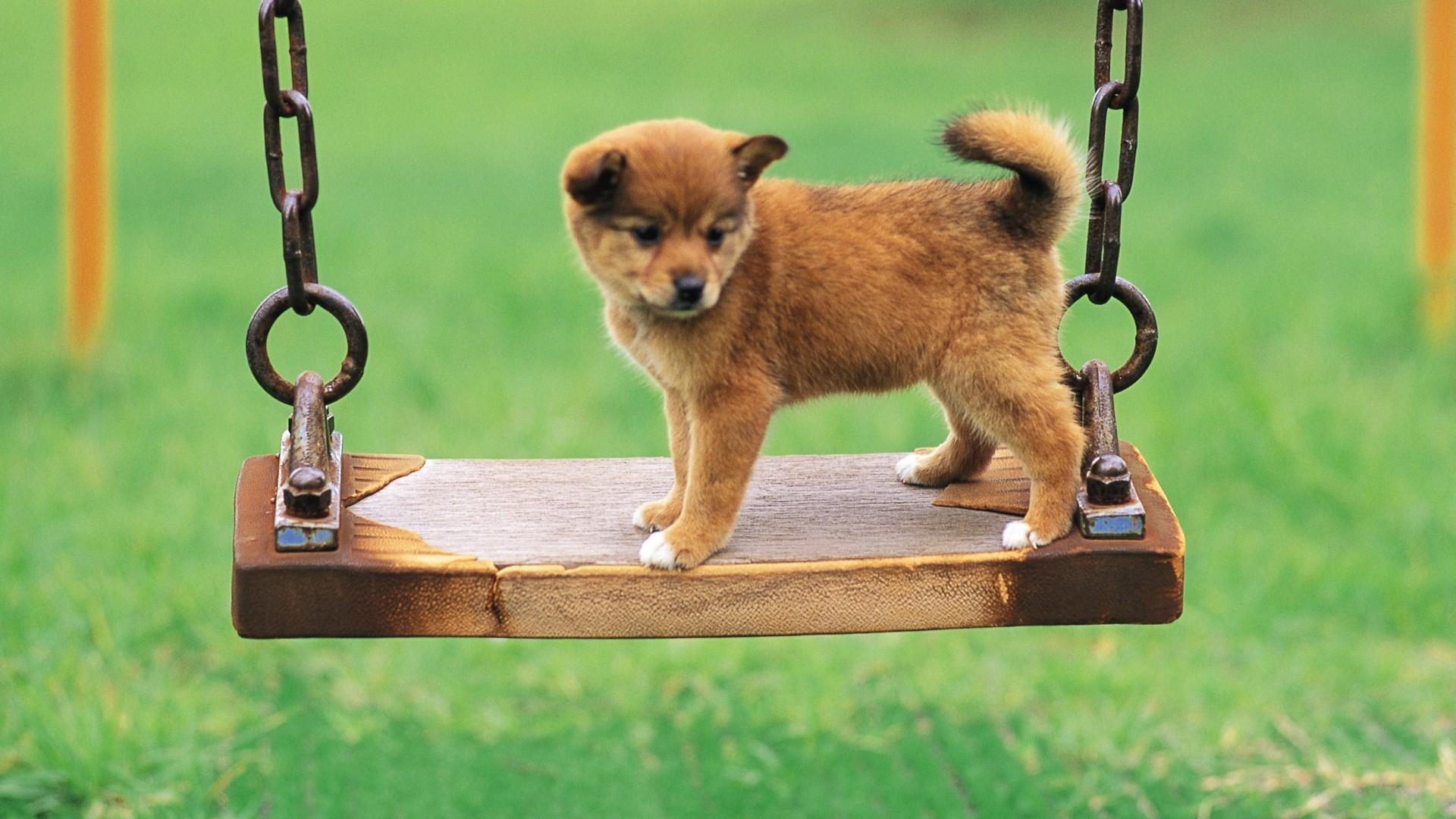 1920x1143 Boxer Puppy Wallpaper Desktop HD