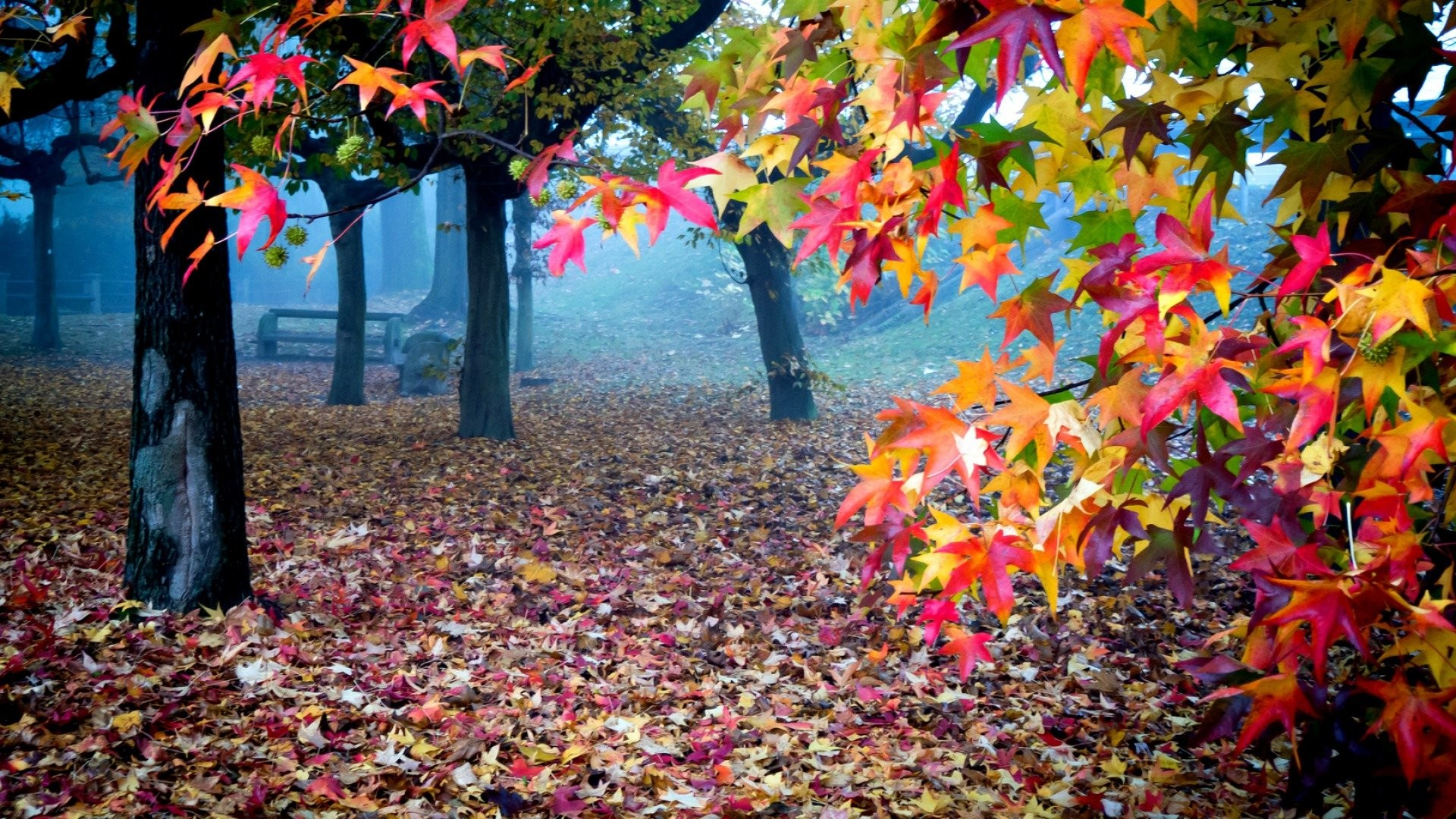 1920x1080 HD Autumn Wallpapers 661 ...