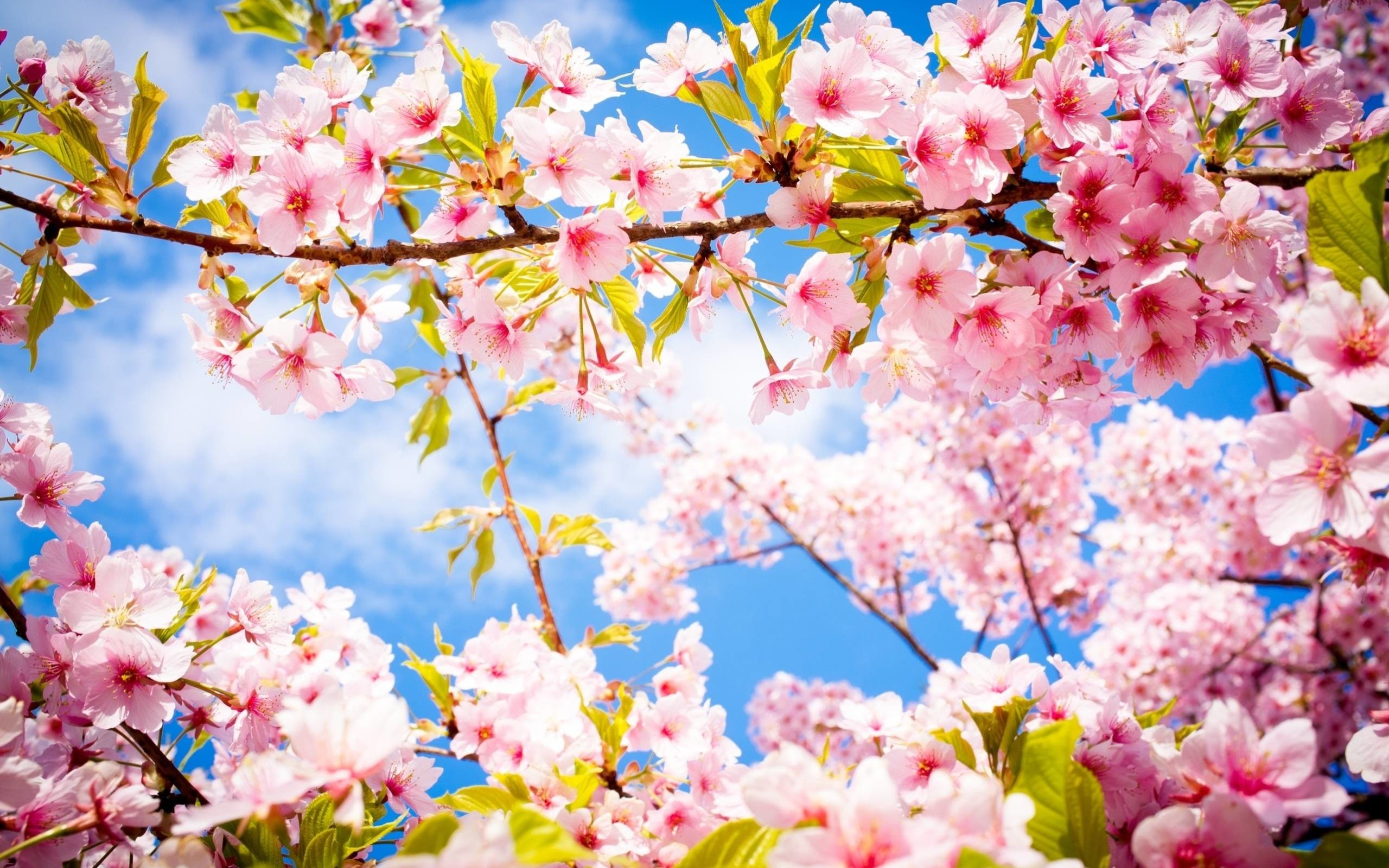 2560x1600 Wallpapers For > Beautiful Spring Flowers Wallpapers