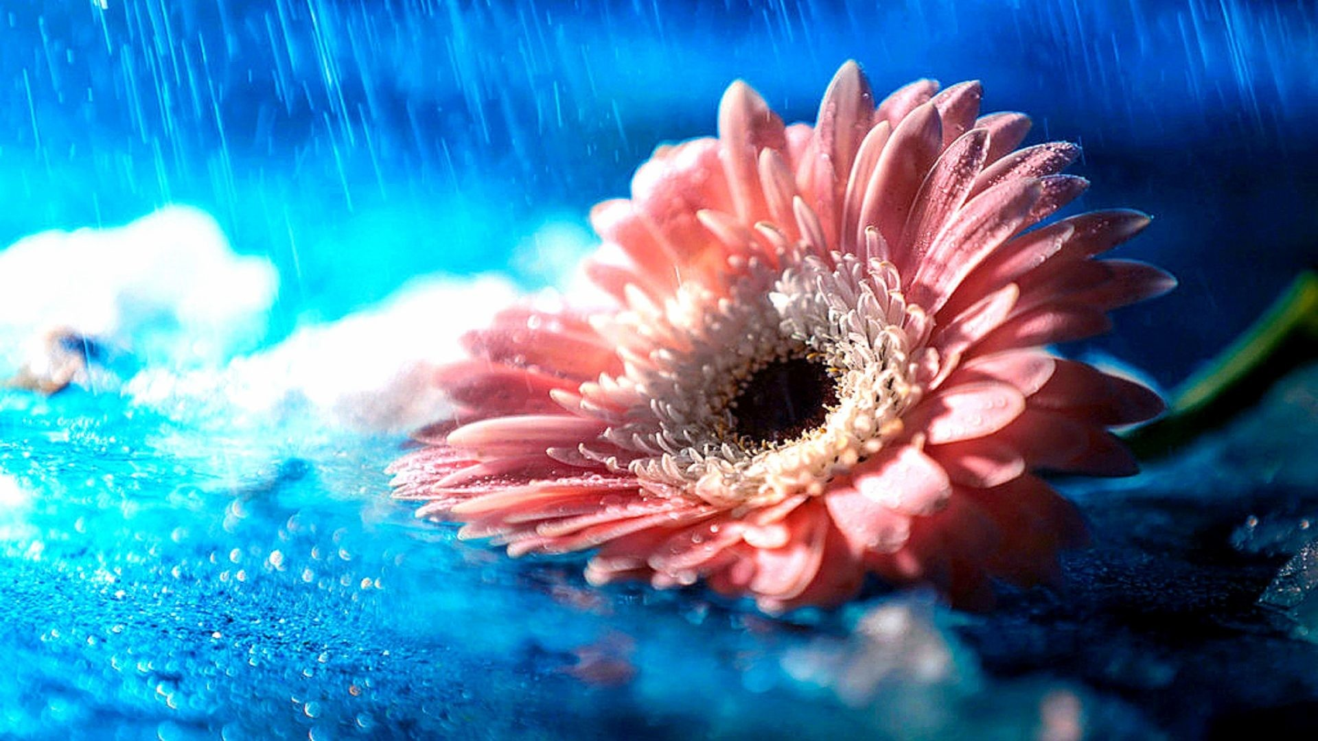 Love Pink Orchid Flower Romantic Wallpaper 24 3687 Hd: Pretty Color Wallpaper (46+ Images