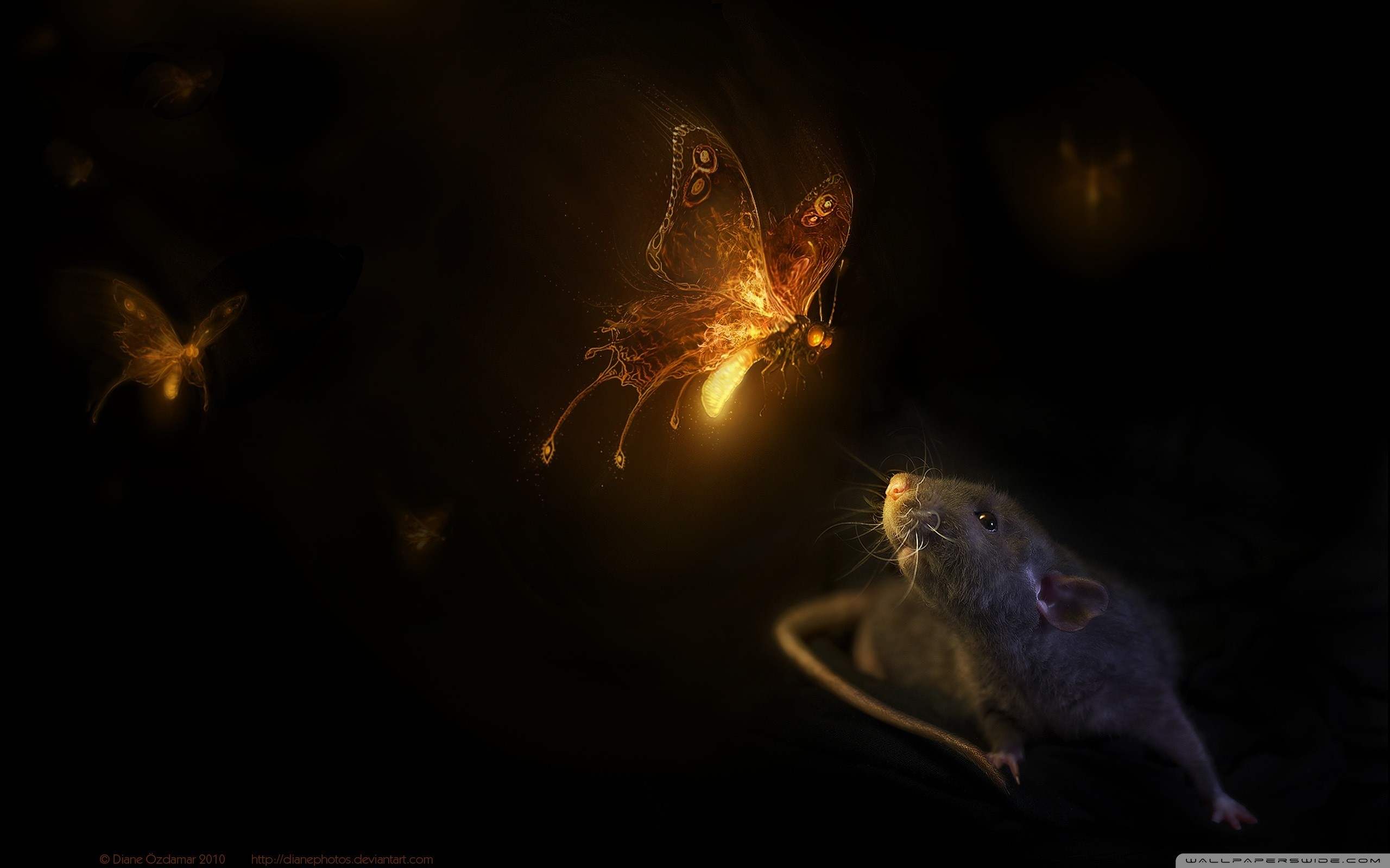 Firefly Wallpaper 1920x1080 81 Images