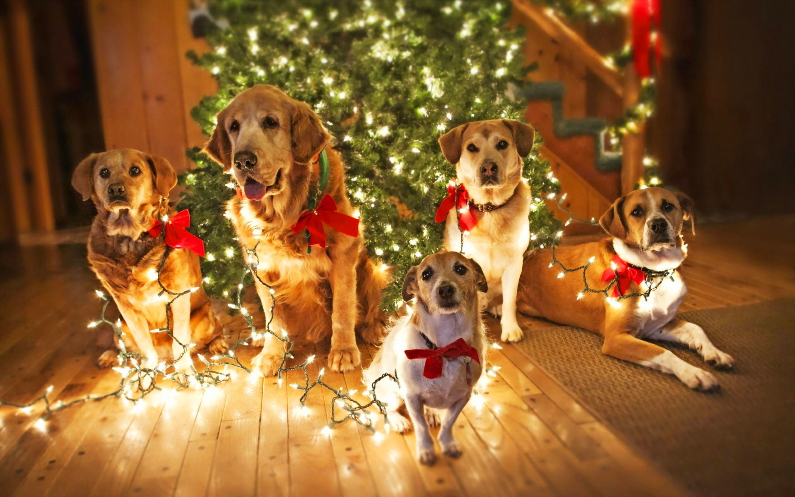 Christmas Dogs Wallpapers 51 Images