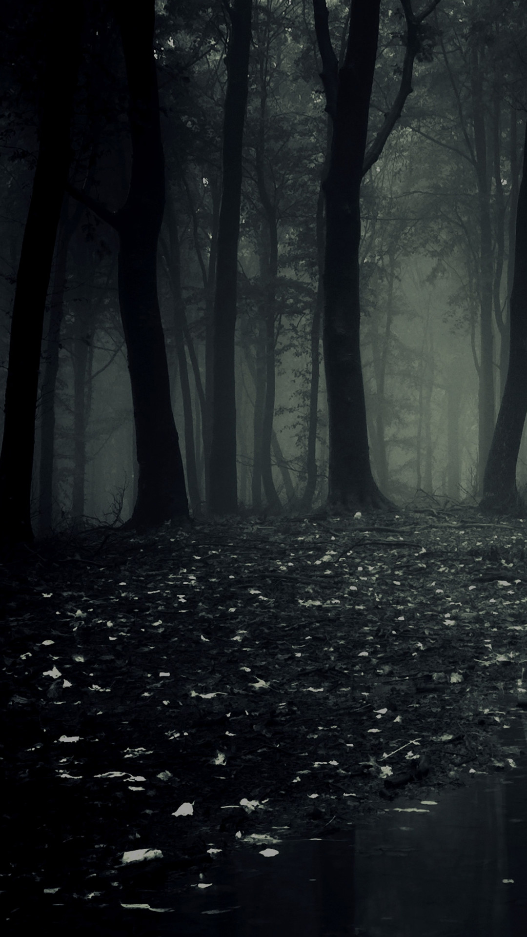 2736x2141 Collection Of Dark Forest Widescreen Wallpapers Free Download