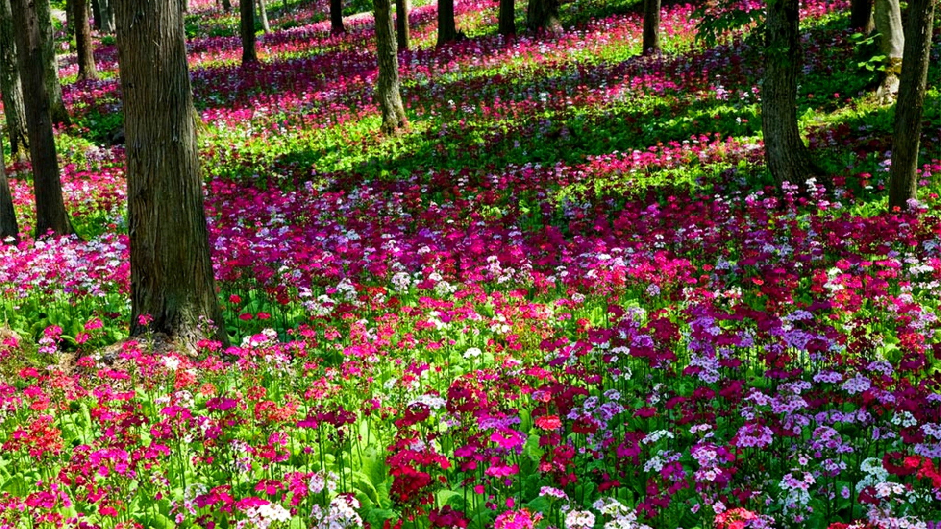 1920x1080 Beautiful Gardens With Pink | Beautiful Multi Colored Flower Garden  Wallpaper | All Flowers | Send