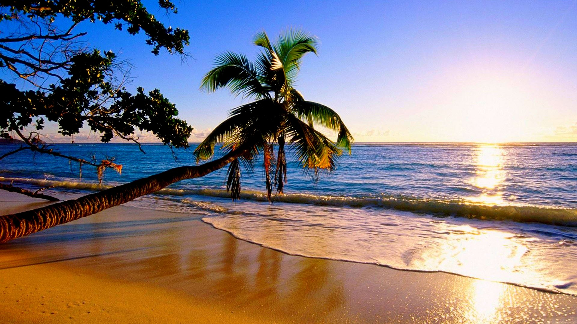 Palm Tree Beaches Wallpapers 76 Images