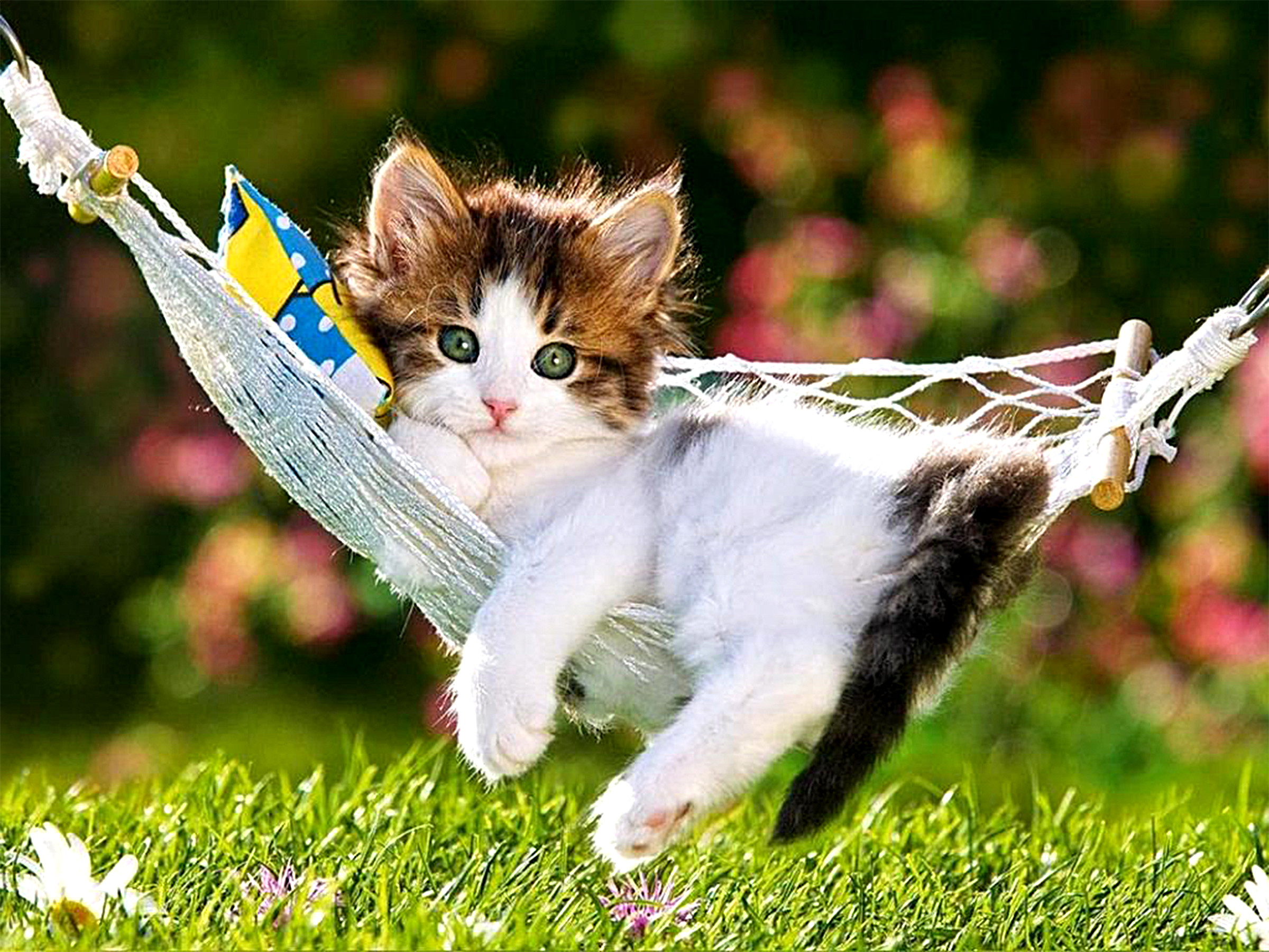 Cute kitten wallpaper 64 images 2400x1800 animal cat animal grass hammock cute kitten wallpaper thecheapjerseys Gallery