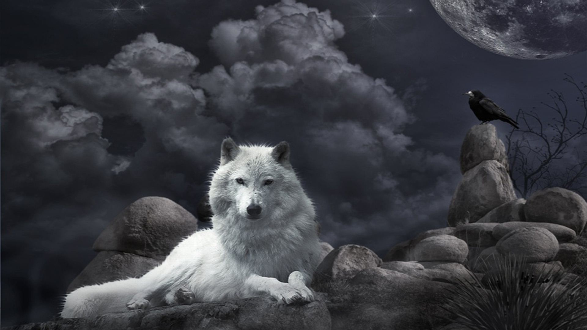 1920x1080 White Wolf Wallpaper Images