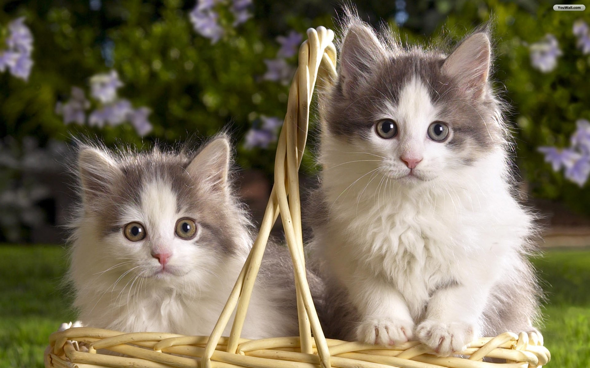 1920x1200 Cats · Cats Cute Cat And Kitten Cats Kittens Desktop Wallpaper