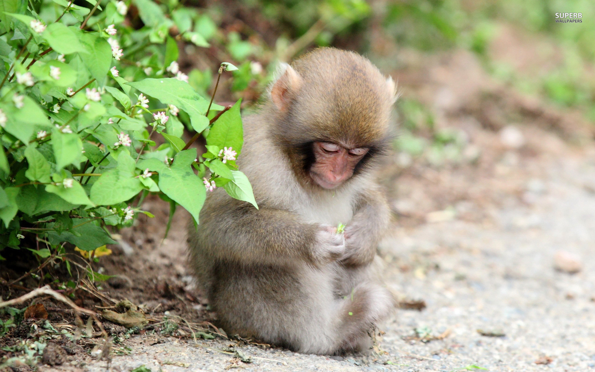 1920x1200 High Resolution Monkey Cute Baby Wallpaper Full Size .