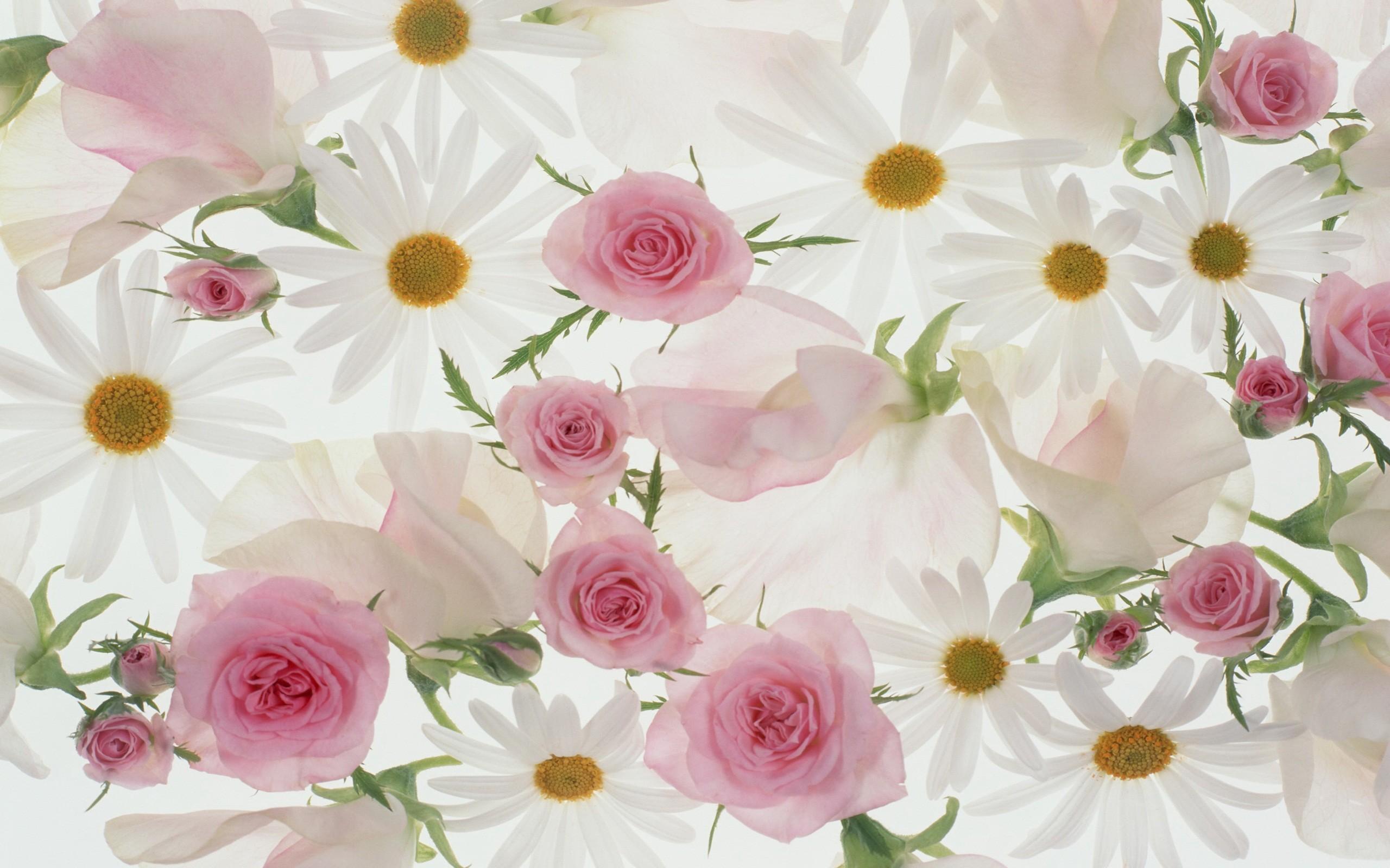 beautiful flowers wallpaper 60 images