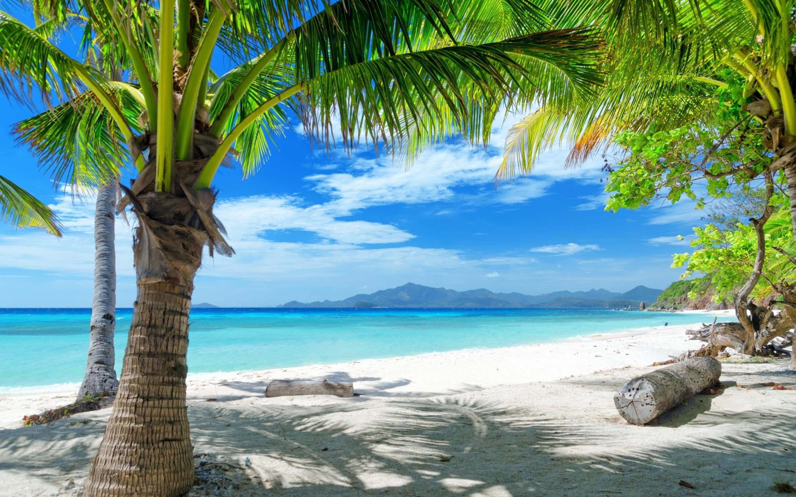 2560x1600 Tempting ocean beach with palm trees HD Desktop Wallpaper | HD .