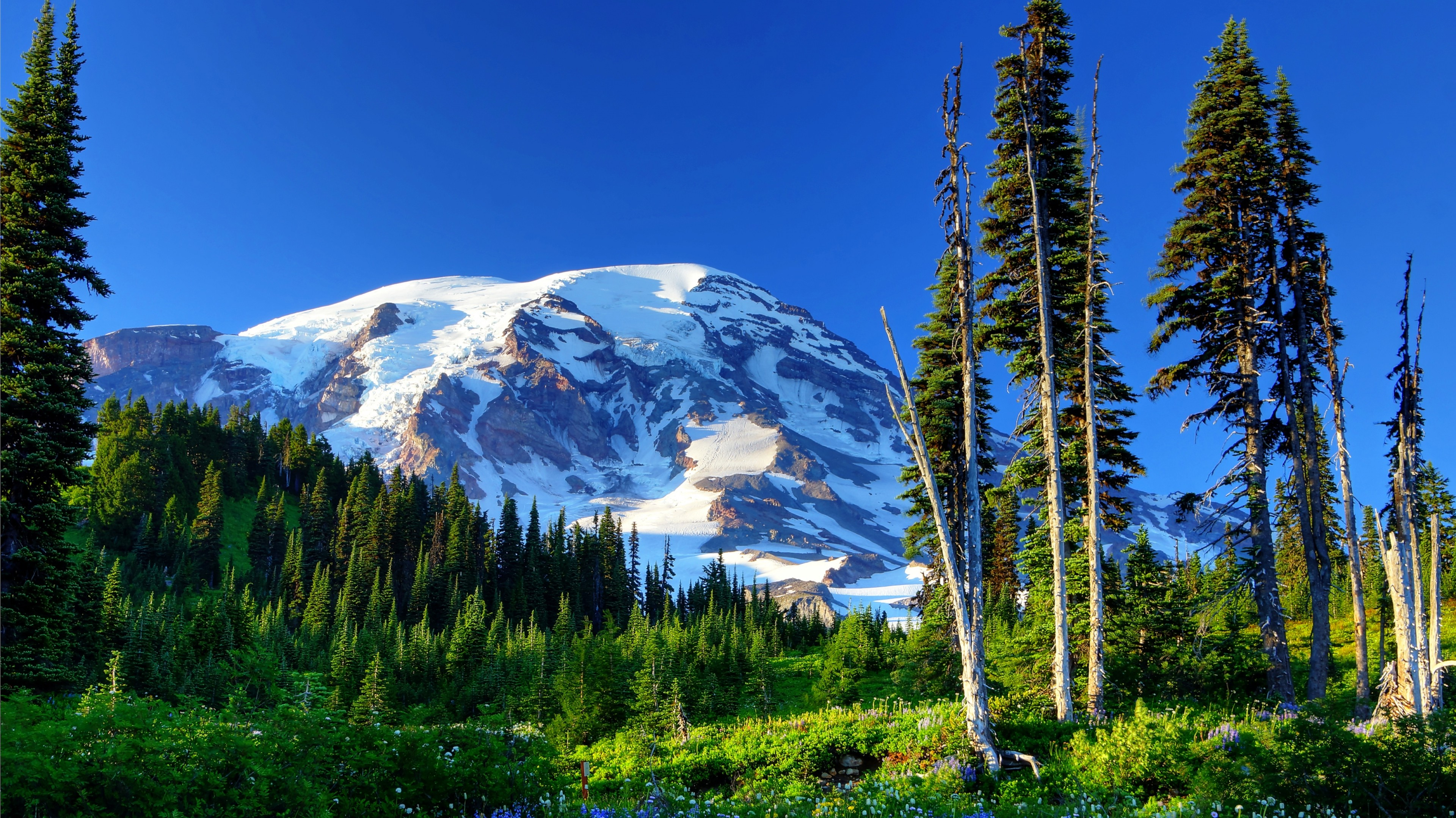 3840x2160 Mount rainier usa mountains snow trees grass flowers slope